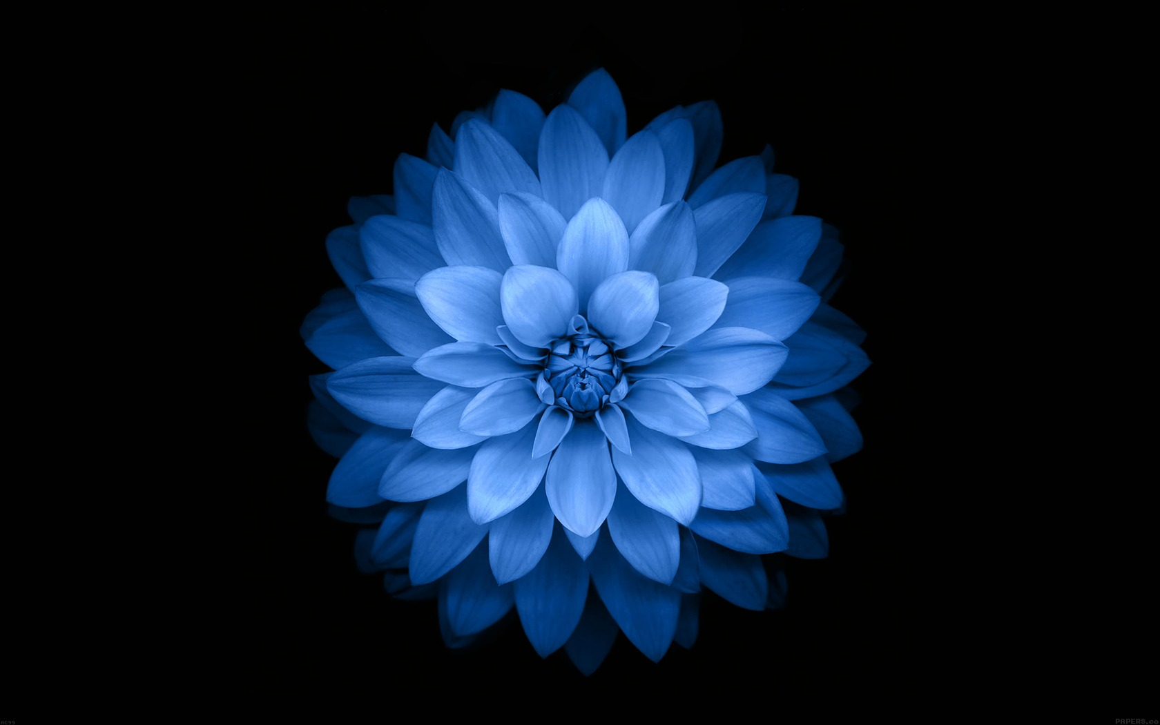 Download The New Ios 8 Wallpapers: 青蓮の花-Apple IOS8 IPhone6 Plus HDの壁紙プレビュー