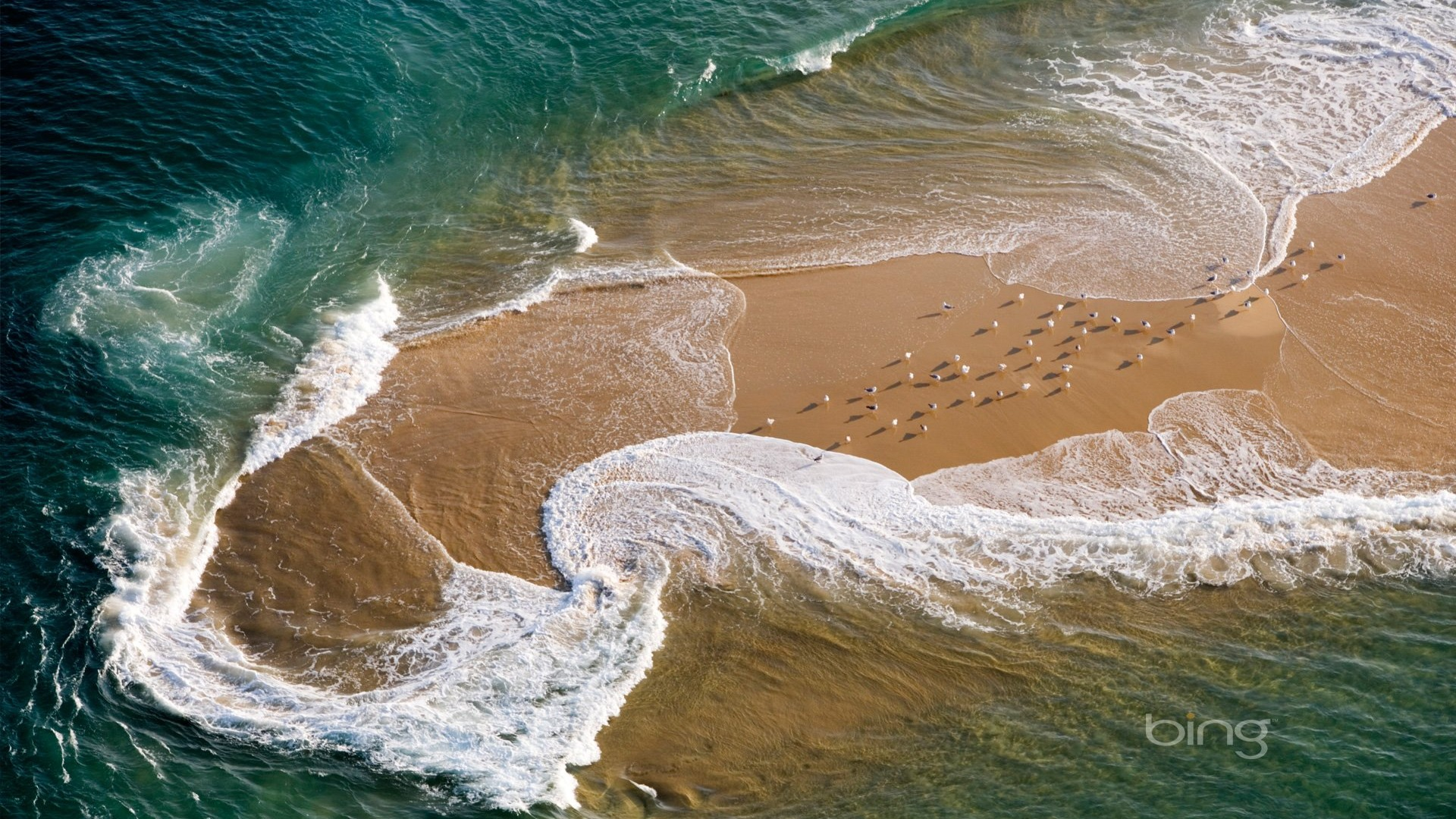 Aerial France Seagull Nature Wallpapers-1920x1080 Download ...