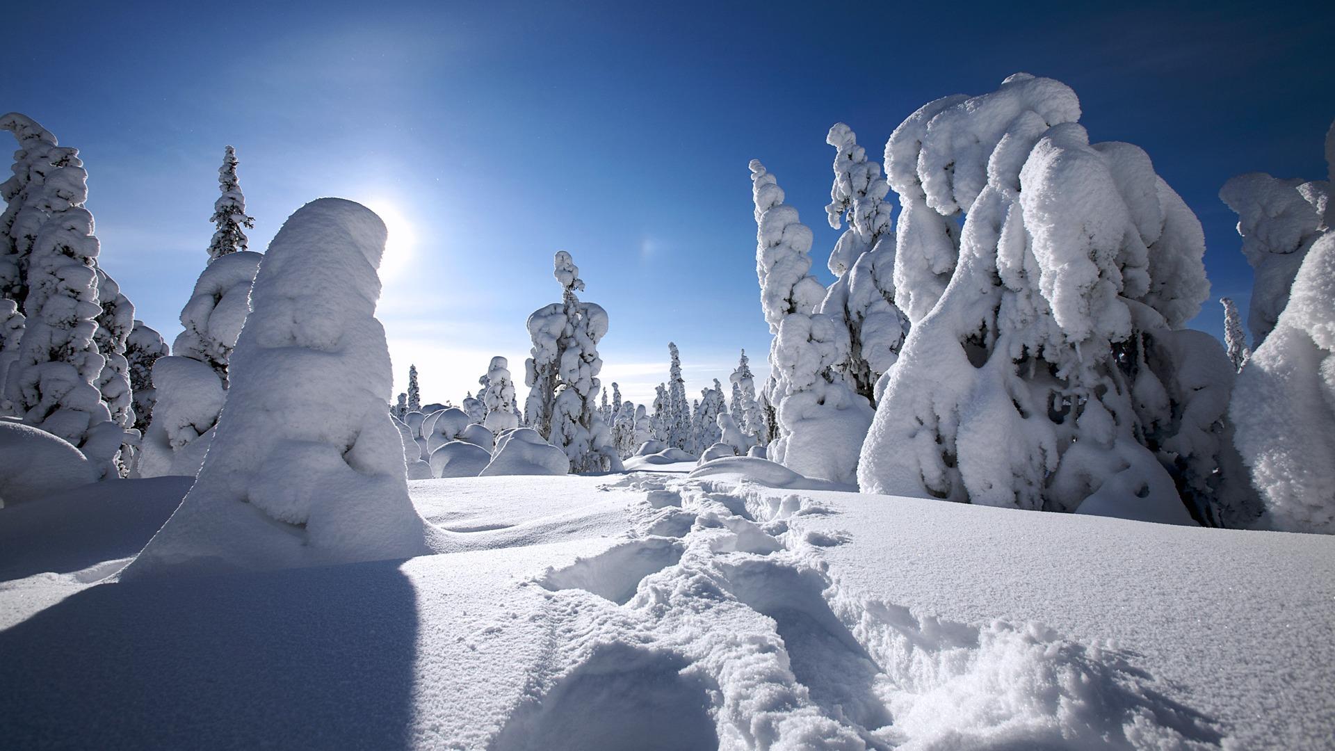 フィンランドのラップランドの雪で覆われた壁紙プレビュー 10wallpaper Com