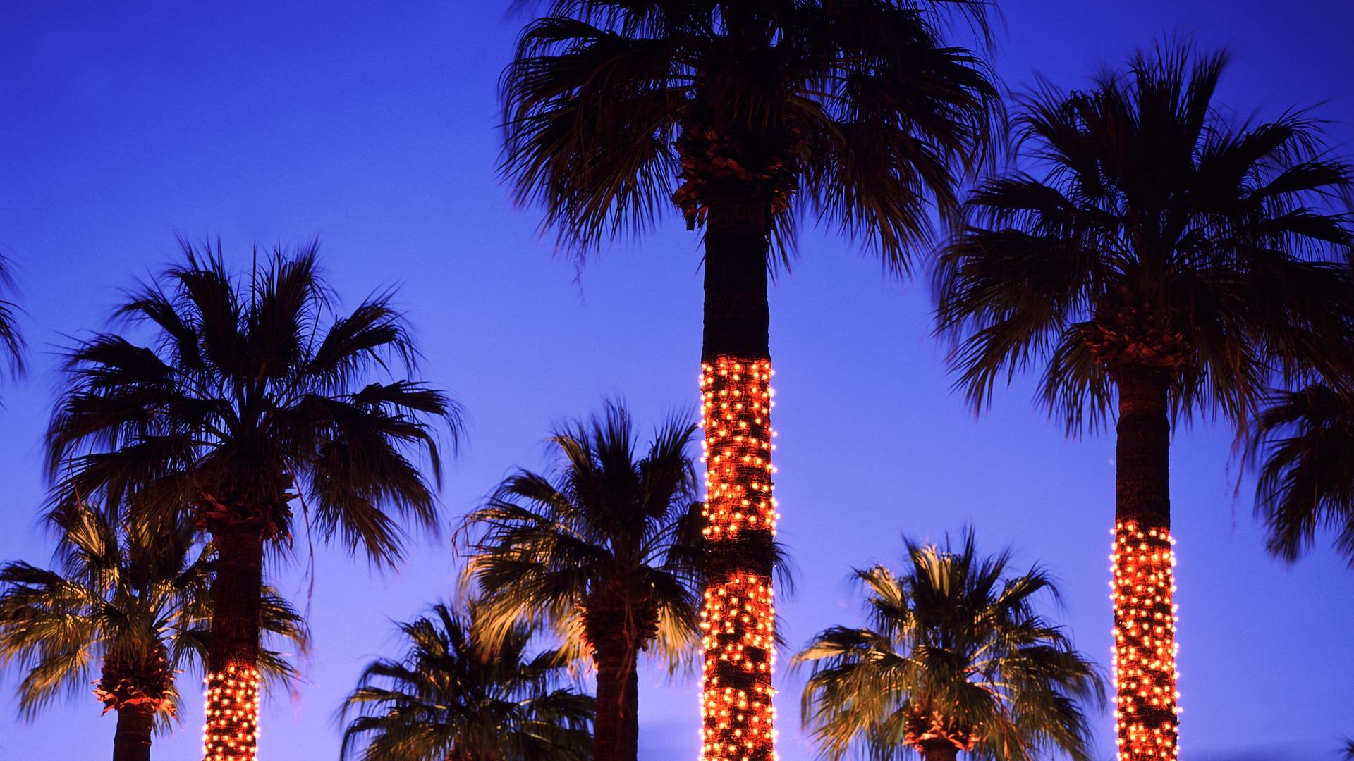 put up christmas lights palm tree wallpaper preview | 10wallpaper