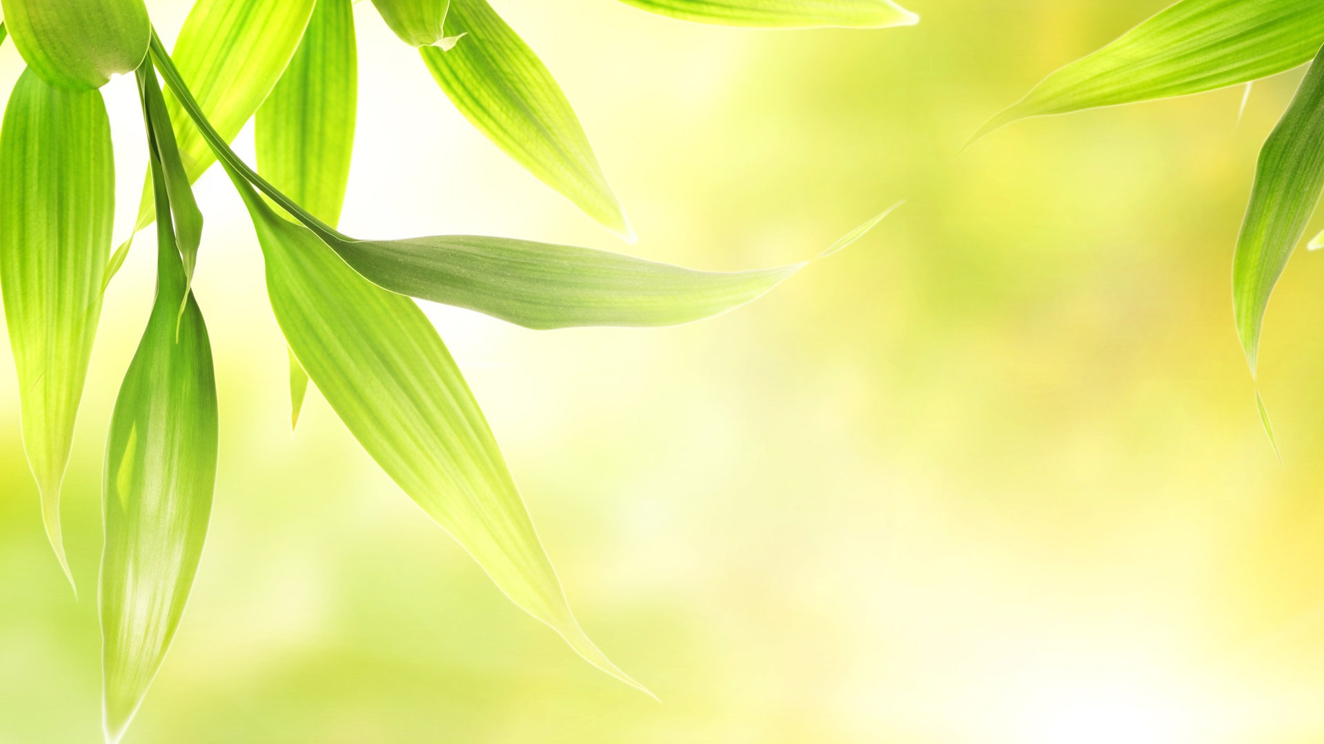 Fresh Green Soft Leaves Preview