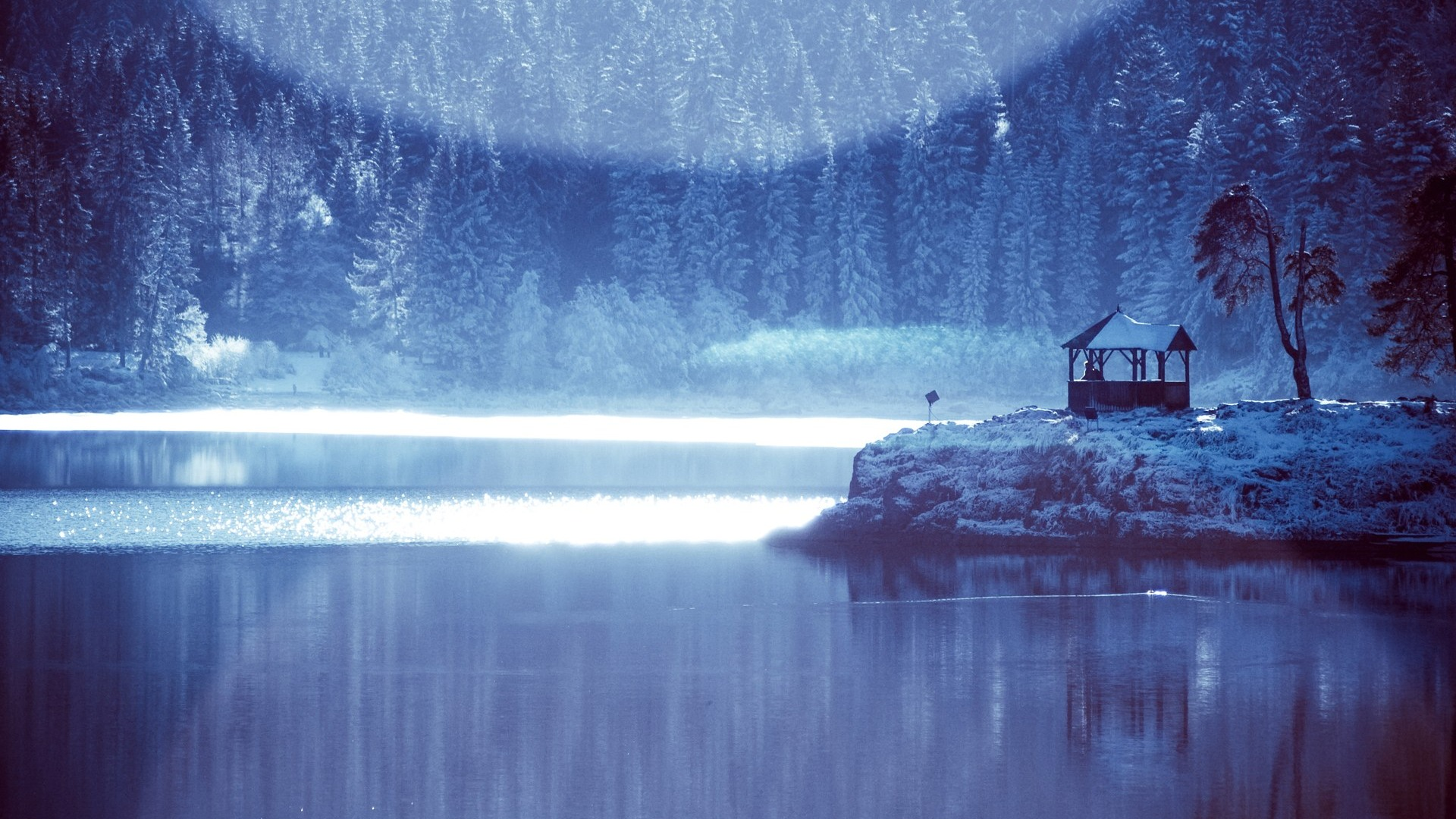 Forest Snow  Alternative Landscape Photographyx