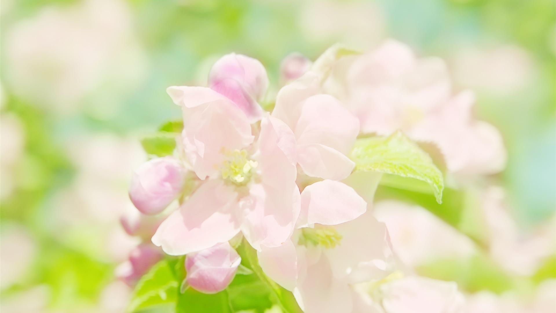 春咲きの花の壁紙プレビュー 10wallpaper Com