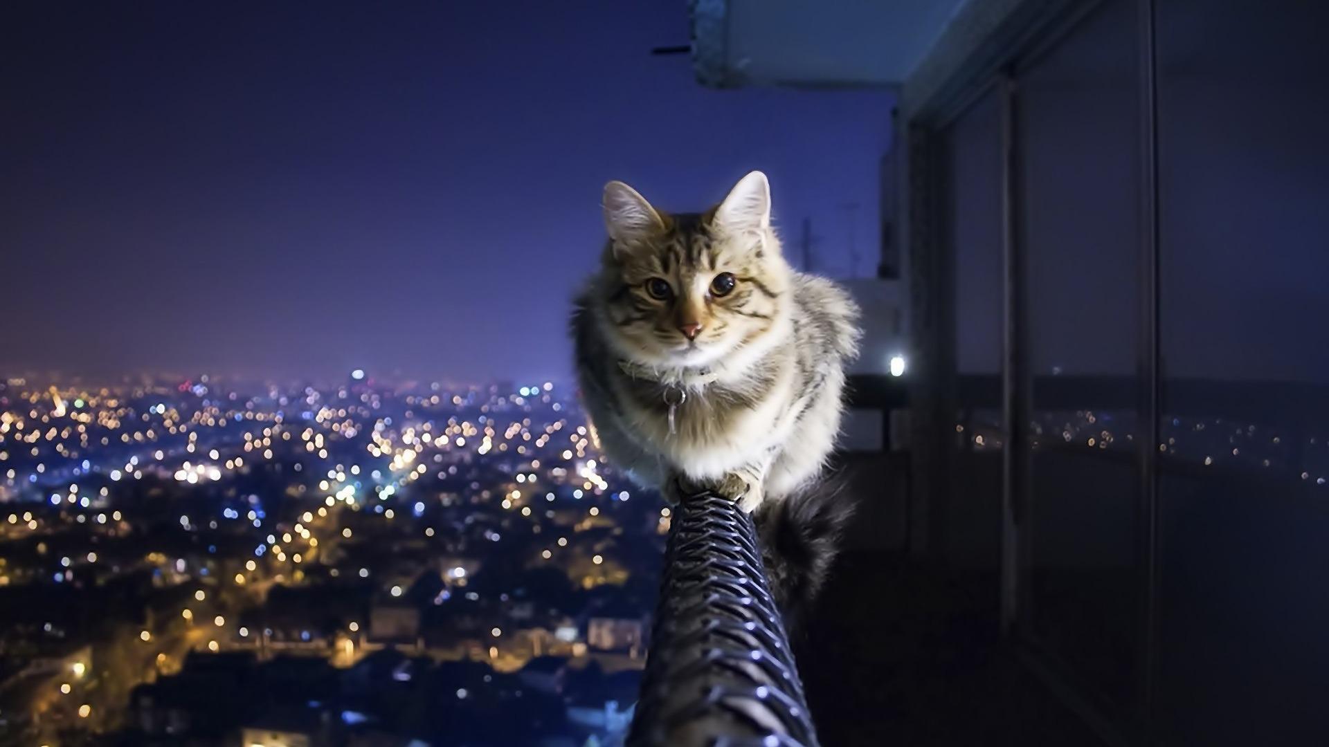 夜の猫 かわいいキティの猫の生活壁紙プレビュー 10wallpaper Com