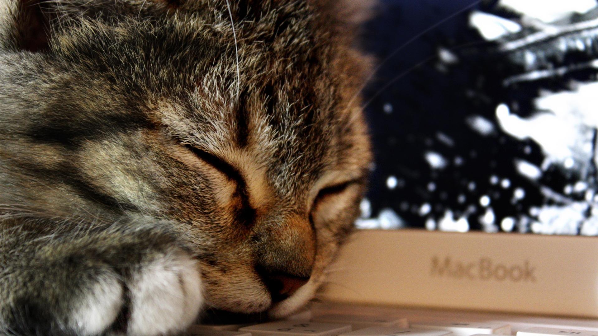 【猫】 ねこ! きれいな壁紙 【1920×1080】 : 【1920×1080】 猫の壁紙 【フルHD/cat ... Hd Wallpaper 1920 X 1080 Kittens