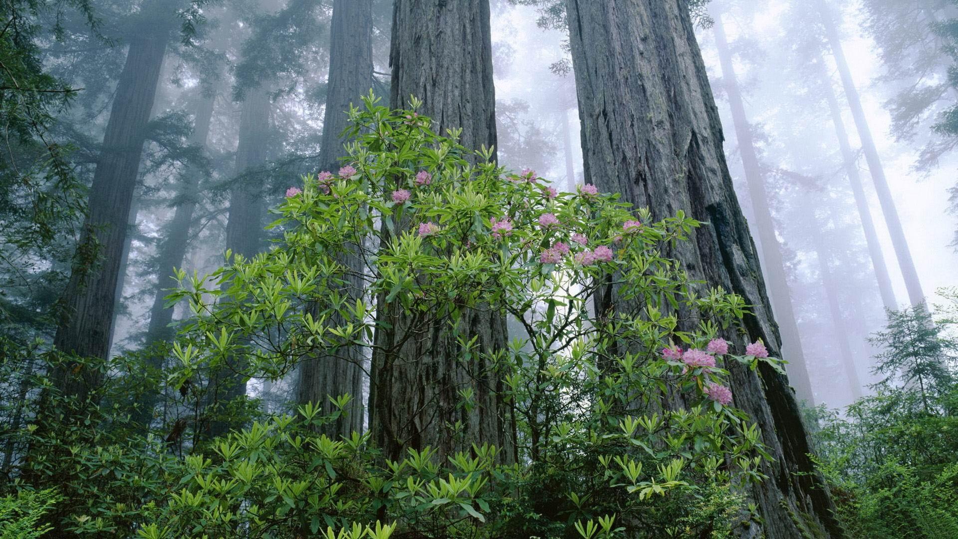 レッドウッド国立公園の画像 p1_2