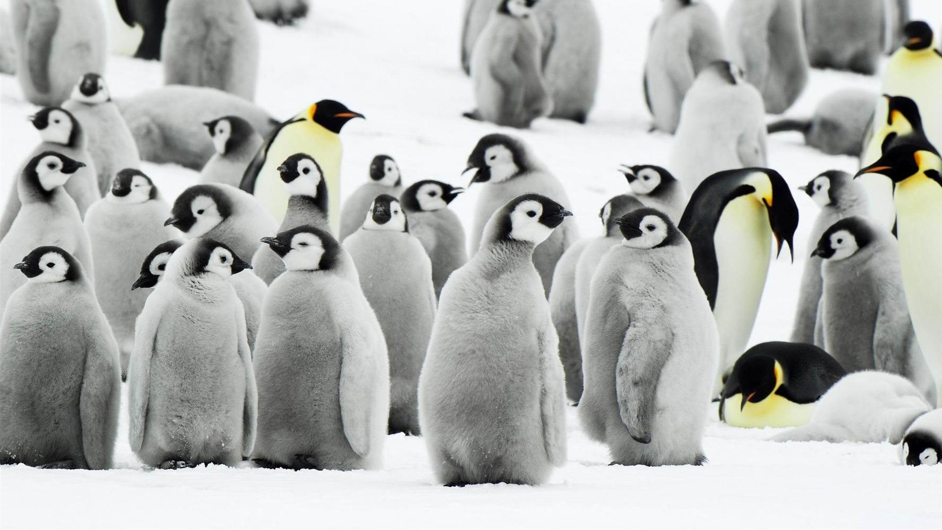 ペンギン 動物写真の壁紙プレビュー 10wallpaper Com