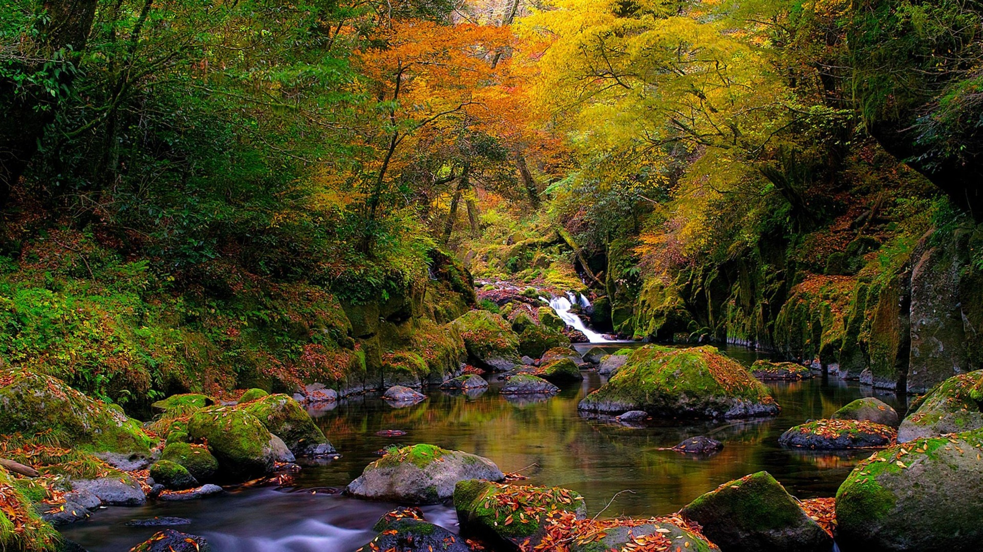 Beautiful Rainy Landscapes Wallpapers Hd 2018 Wallpapertag: 森の小川秋-自然の風景の壁紙プレビュー