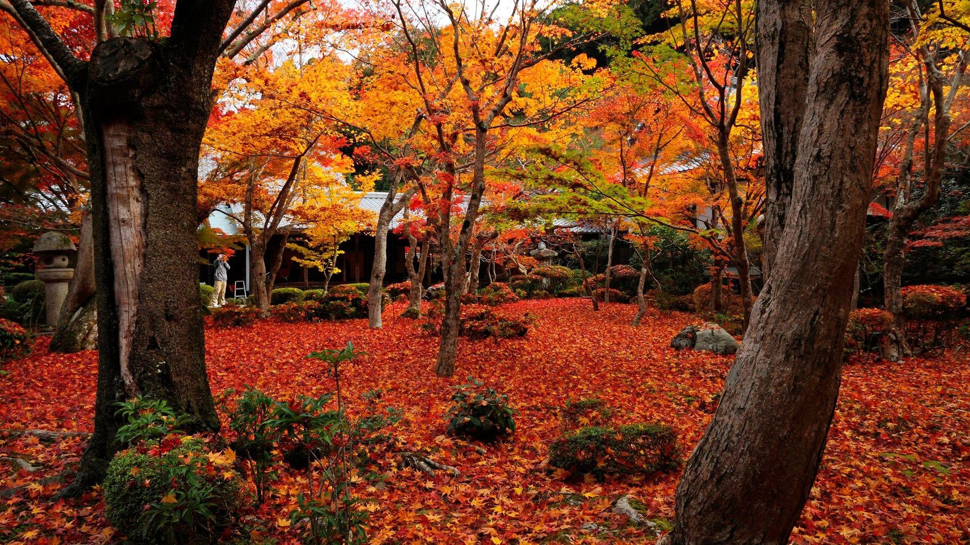 Autumn maple-Enkoji Temple Autumn wallpaper-1920x1080 ...
