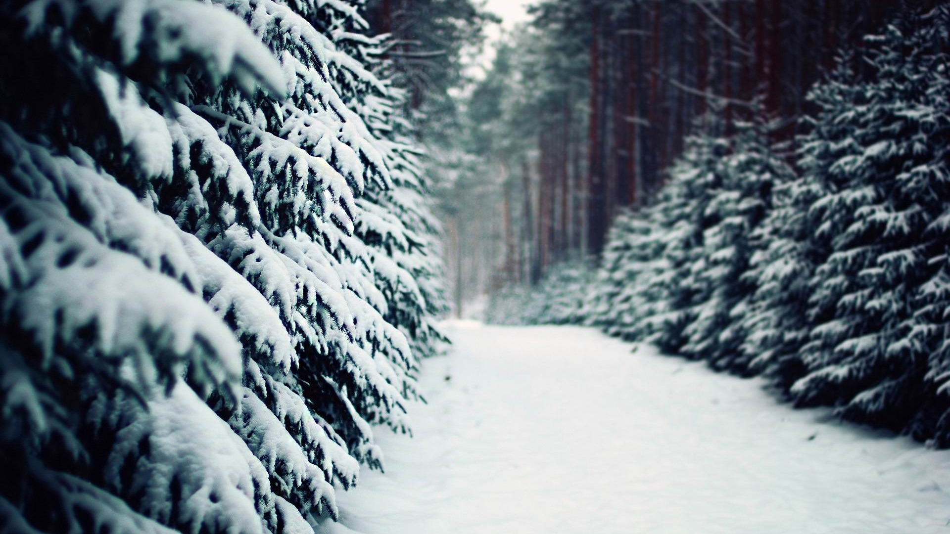 http://www.10wallpaper.com/down/Snow_road_in_the_forest-winter_scenery_HD_Wallpaper_1920x1080_wallpaper.html
