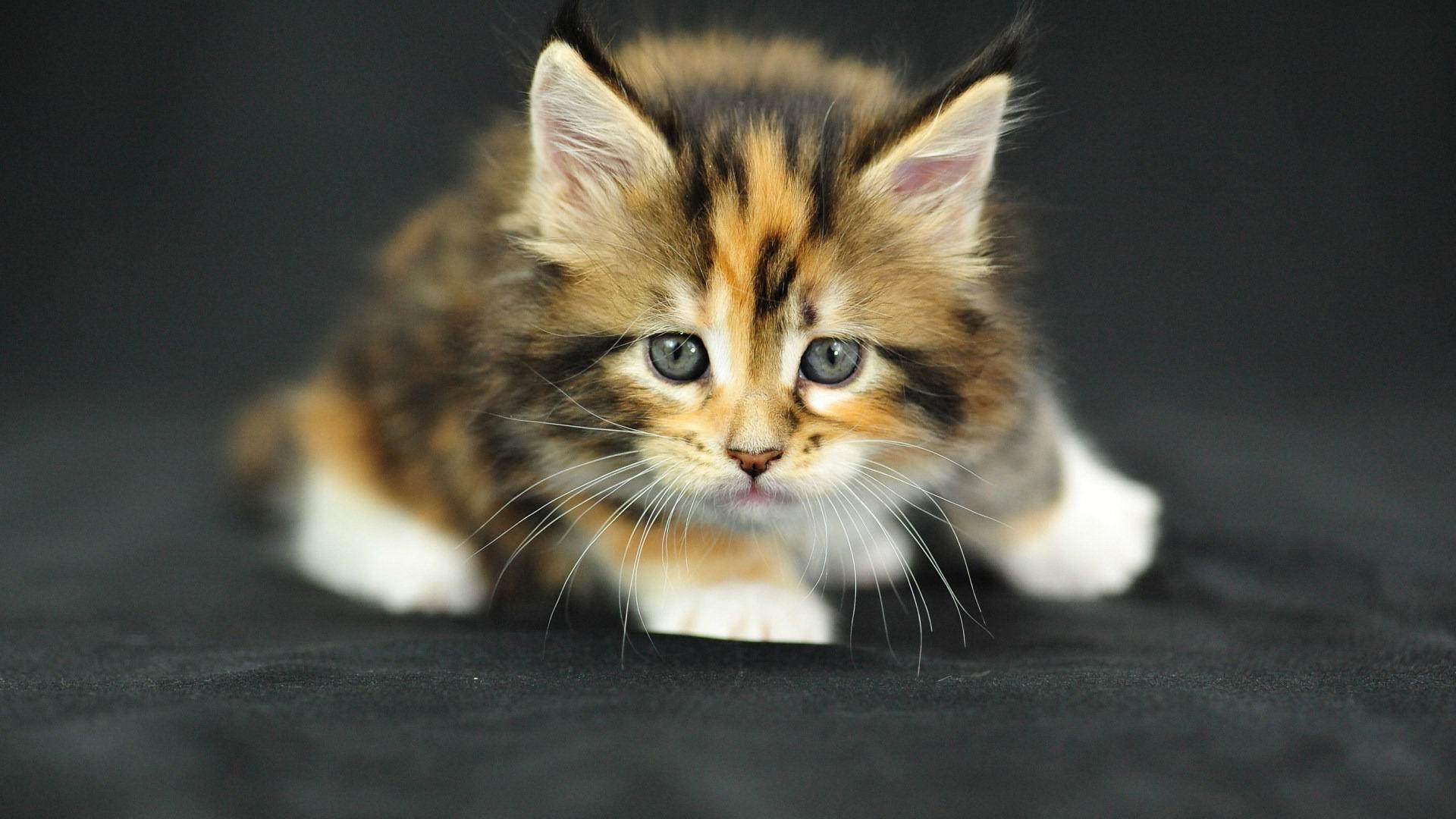 かわいい子猫 かわいい動物の壁紙プレビュー 10wallpaper Com