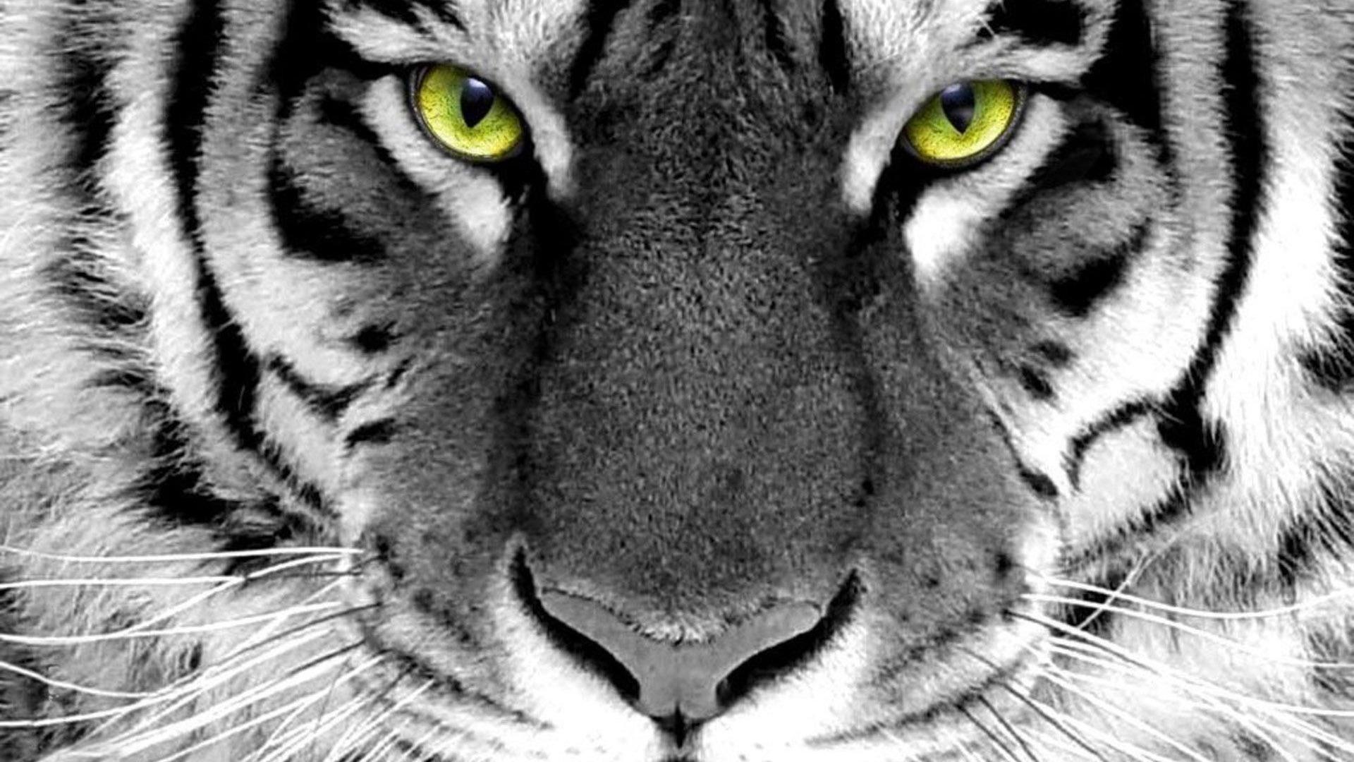 虎 かわいい動物の壁紙プレビュー 10wallpaper Com