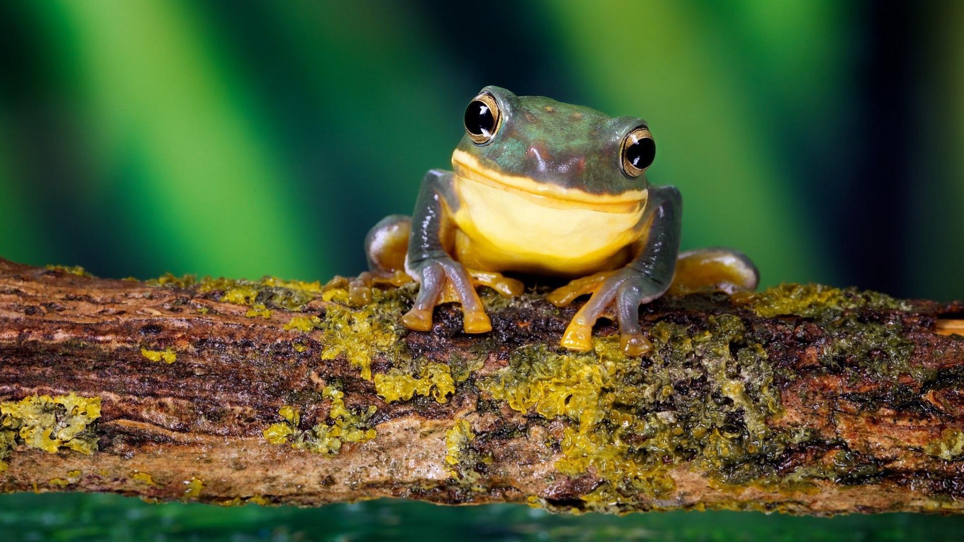 明るいカエル 自然動物写真撮影壁紙プレビュー 10wallpaper Com