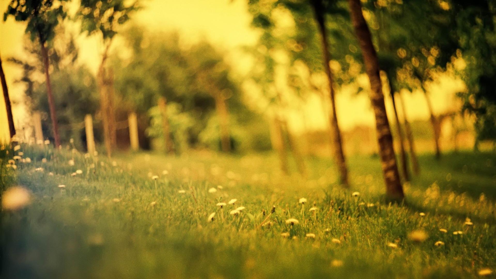 grass field summer flowers-Natural landscape HD wallpaper ...