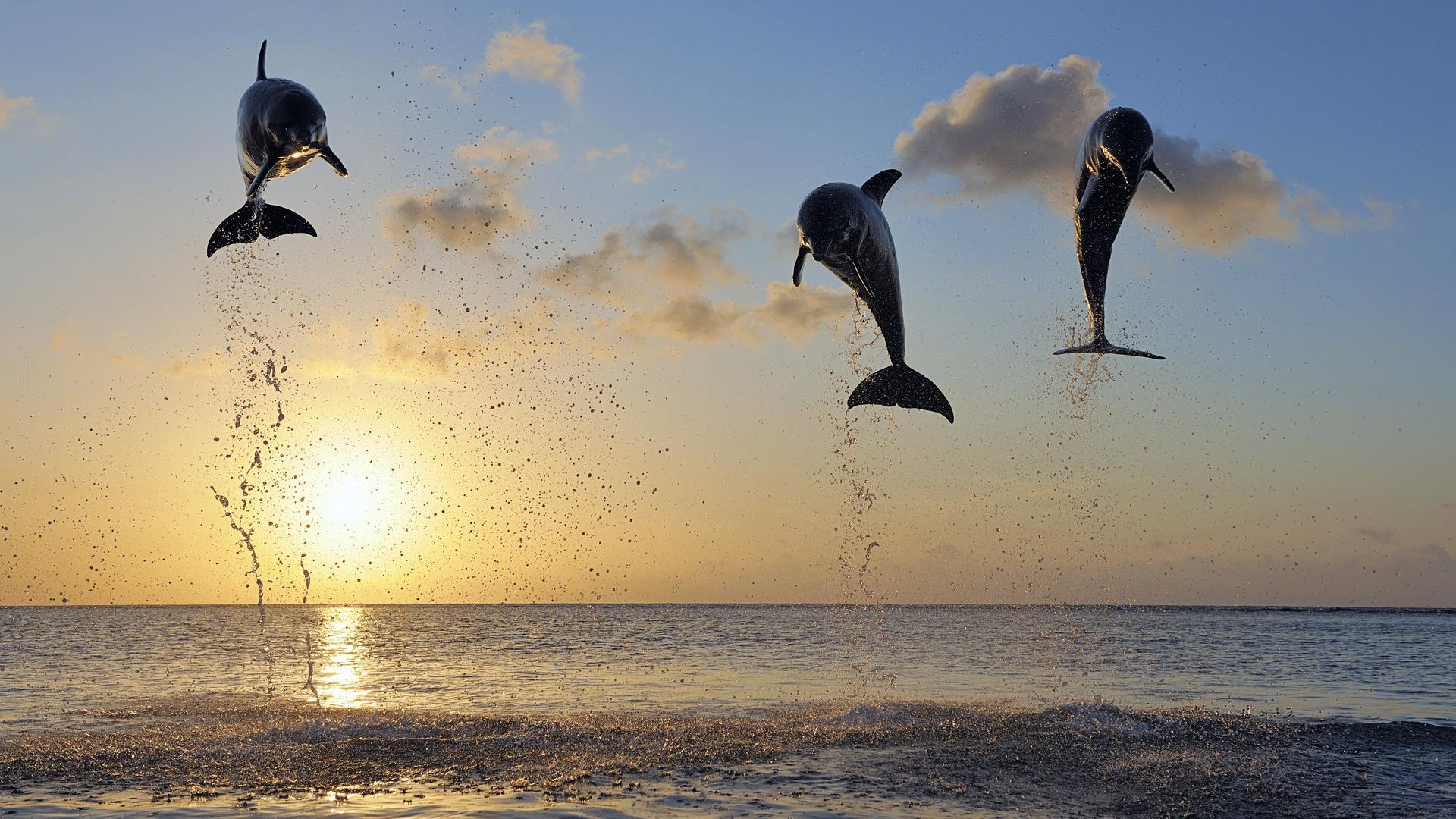 イルカのジャンプ Windows のhdの壁紙プレビュー 10wallpaper Com