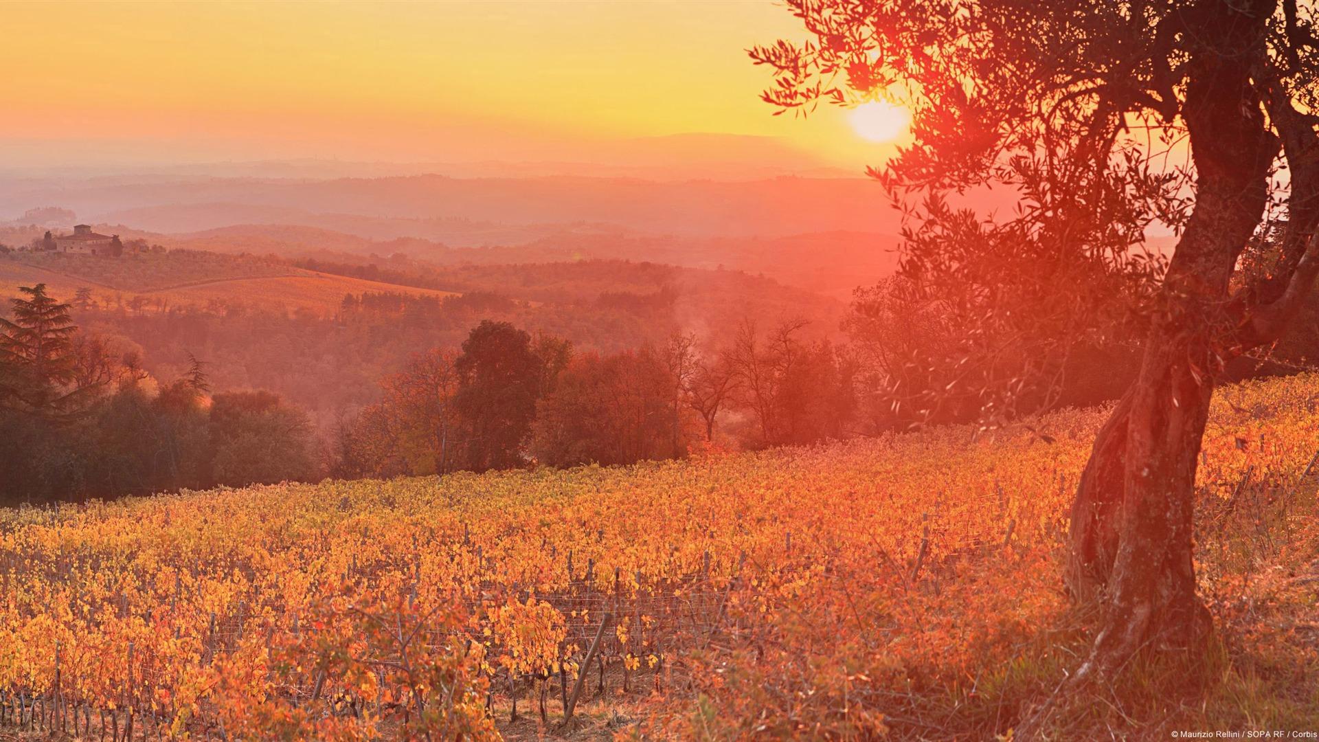 Tuscan Vineyard Sunset-Windows 10 HD Wallpaper Preview ...