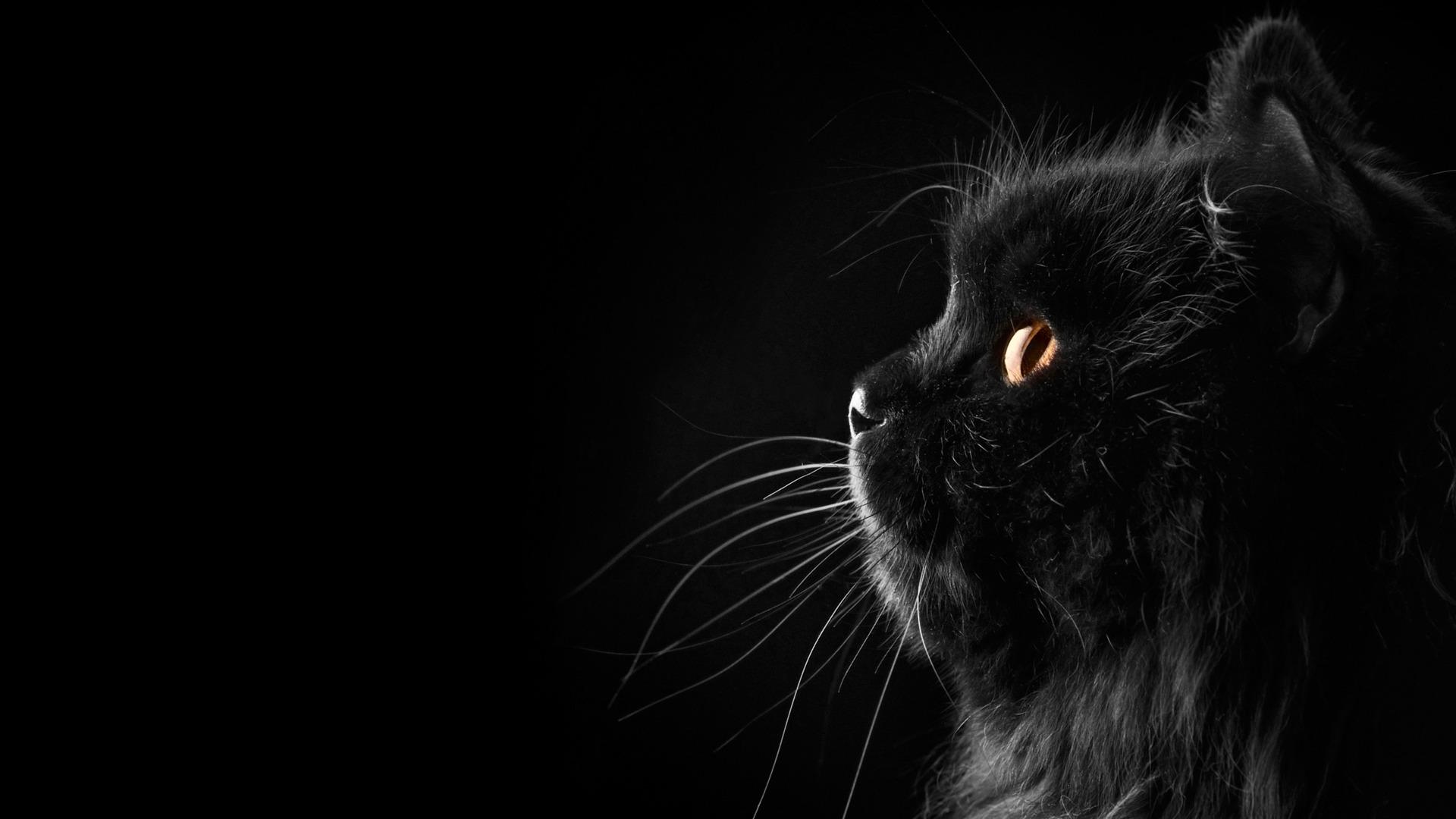 黒猫の画像 p1_35