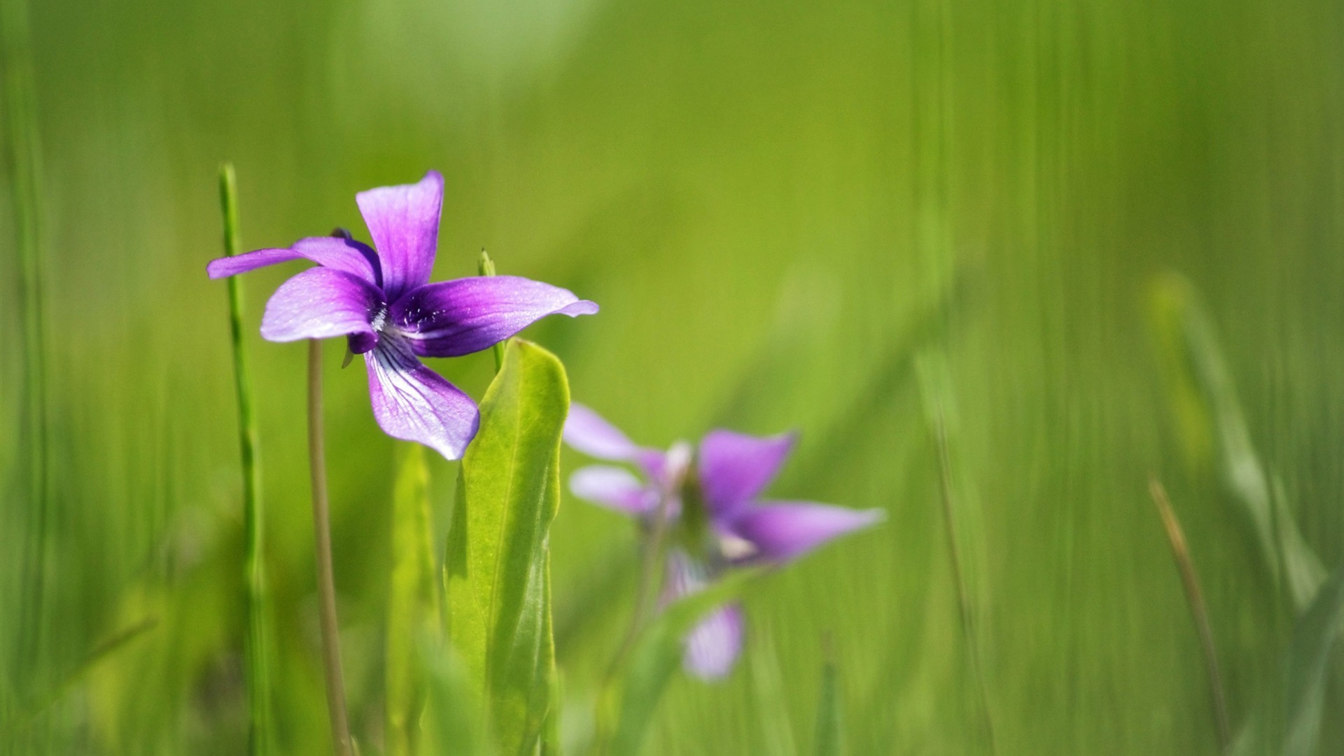 Purple Flowers Growing Photography Hd Wallpaper Preview
