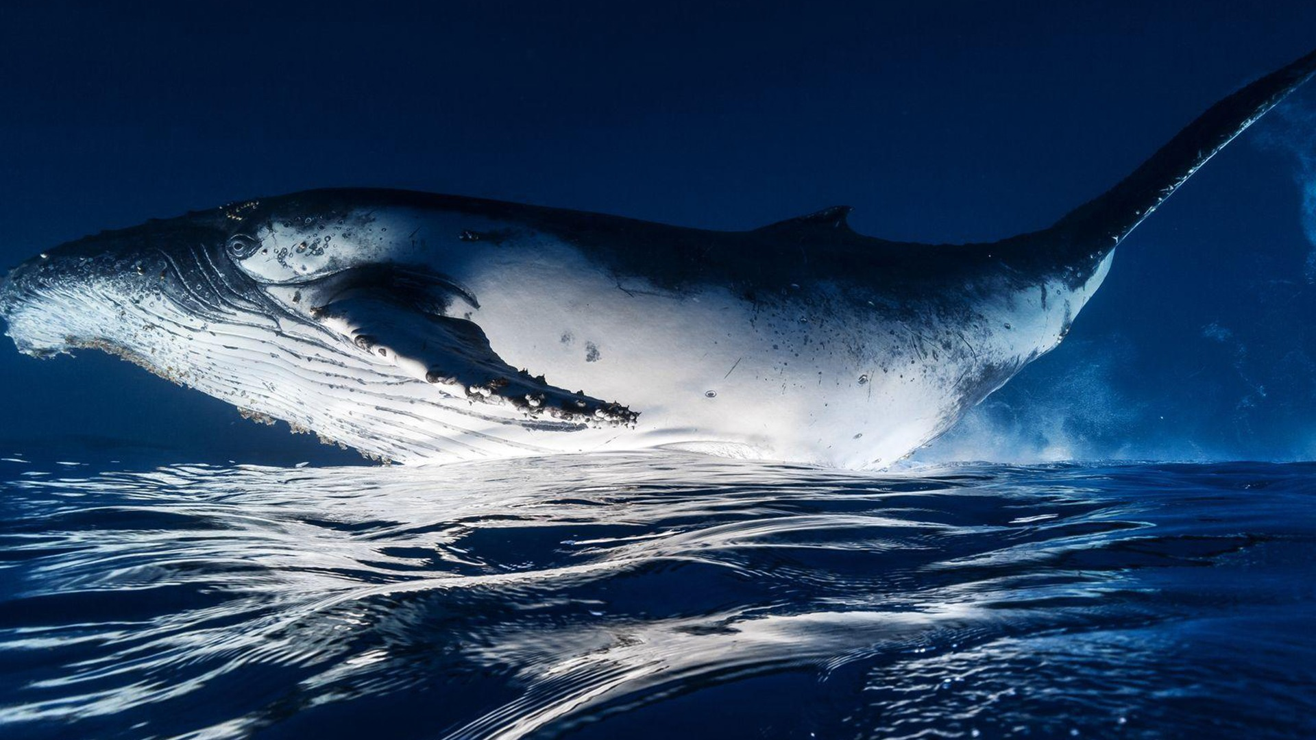 National geographic ocean photos