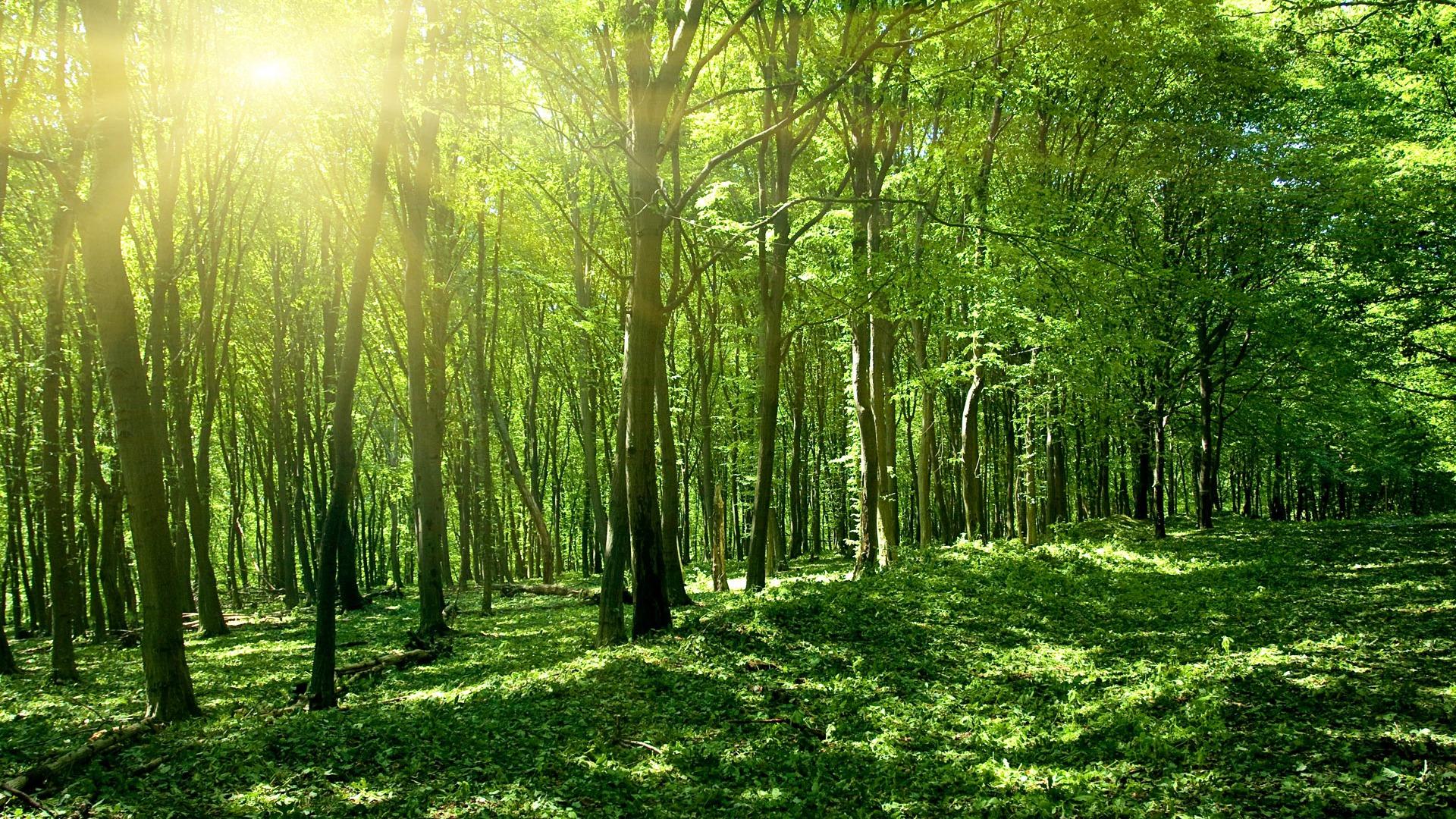 フレッシュジャングル自然風景テーマデスクトップ壁紙プレビュー