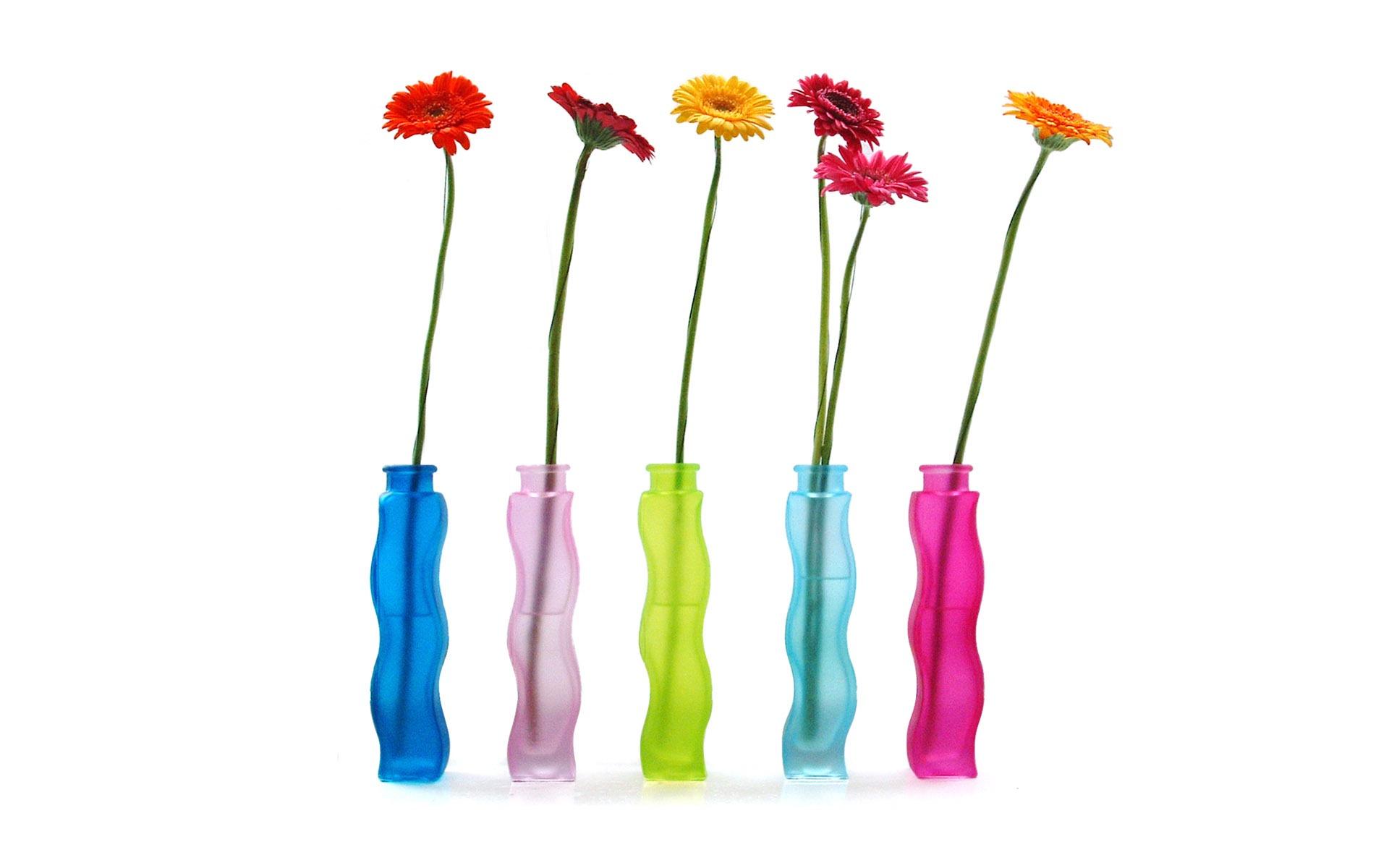 Flores Coloridas Em Vasos Coloridos Visualizacao 10wallpaper Com