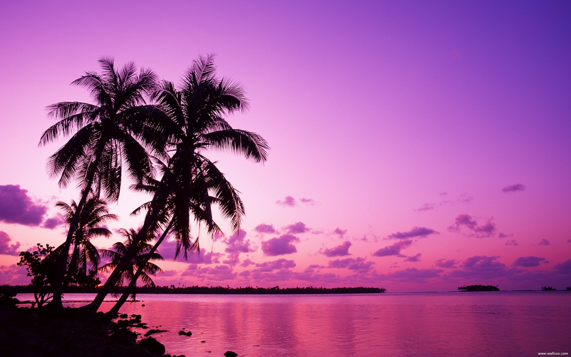 Palm Desert Auto >> Tahitian sunset under the palm wallpaper-1920x1200 ...