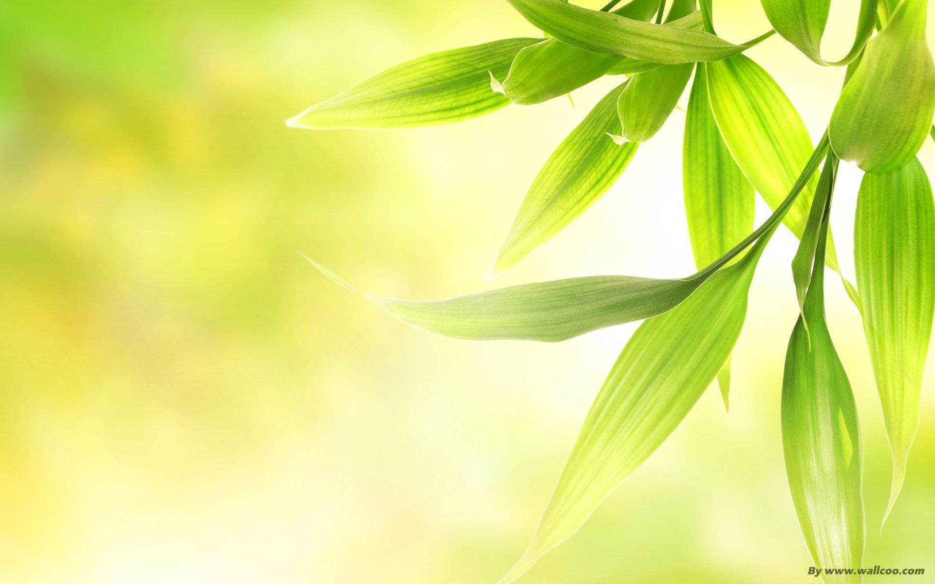 Description: fresh green-fresh dim green leaves Current Size: 1920 x ...: www.10wallpaper.com/down/fresh_green-fresh_dim_green_leaves...