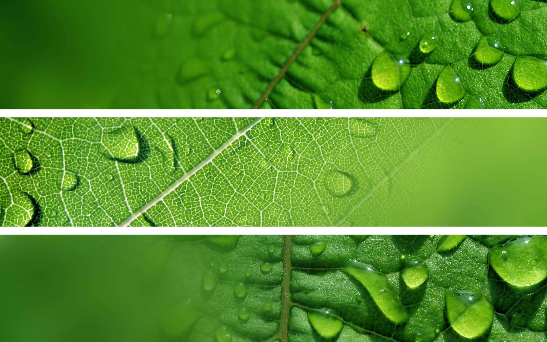 Fresh Green Refreshing Leaves 01 Preview