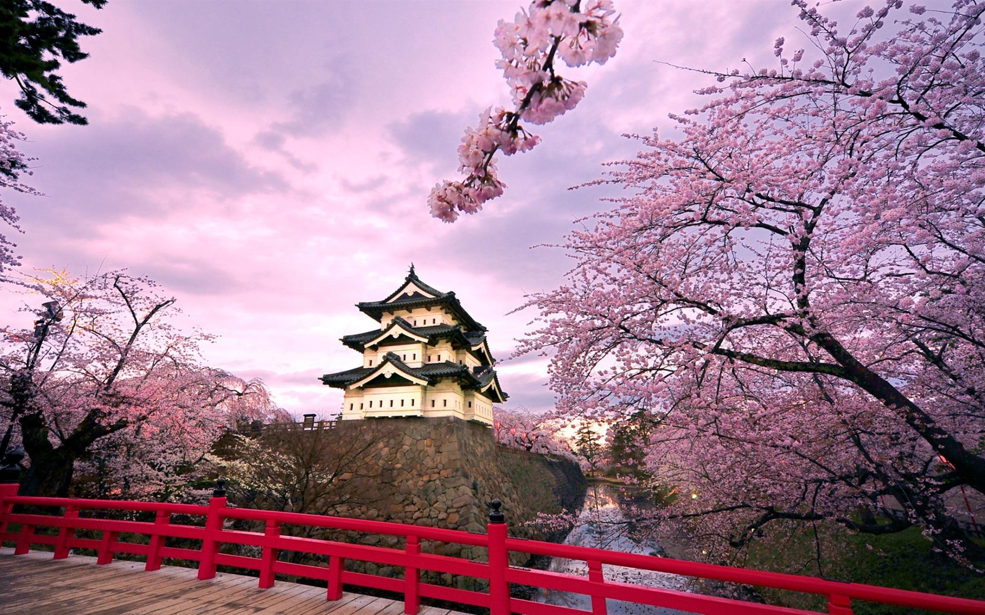 Cerisiers En Fleurs Au Japon Wallpaper Printemps Album Apercu