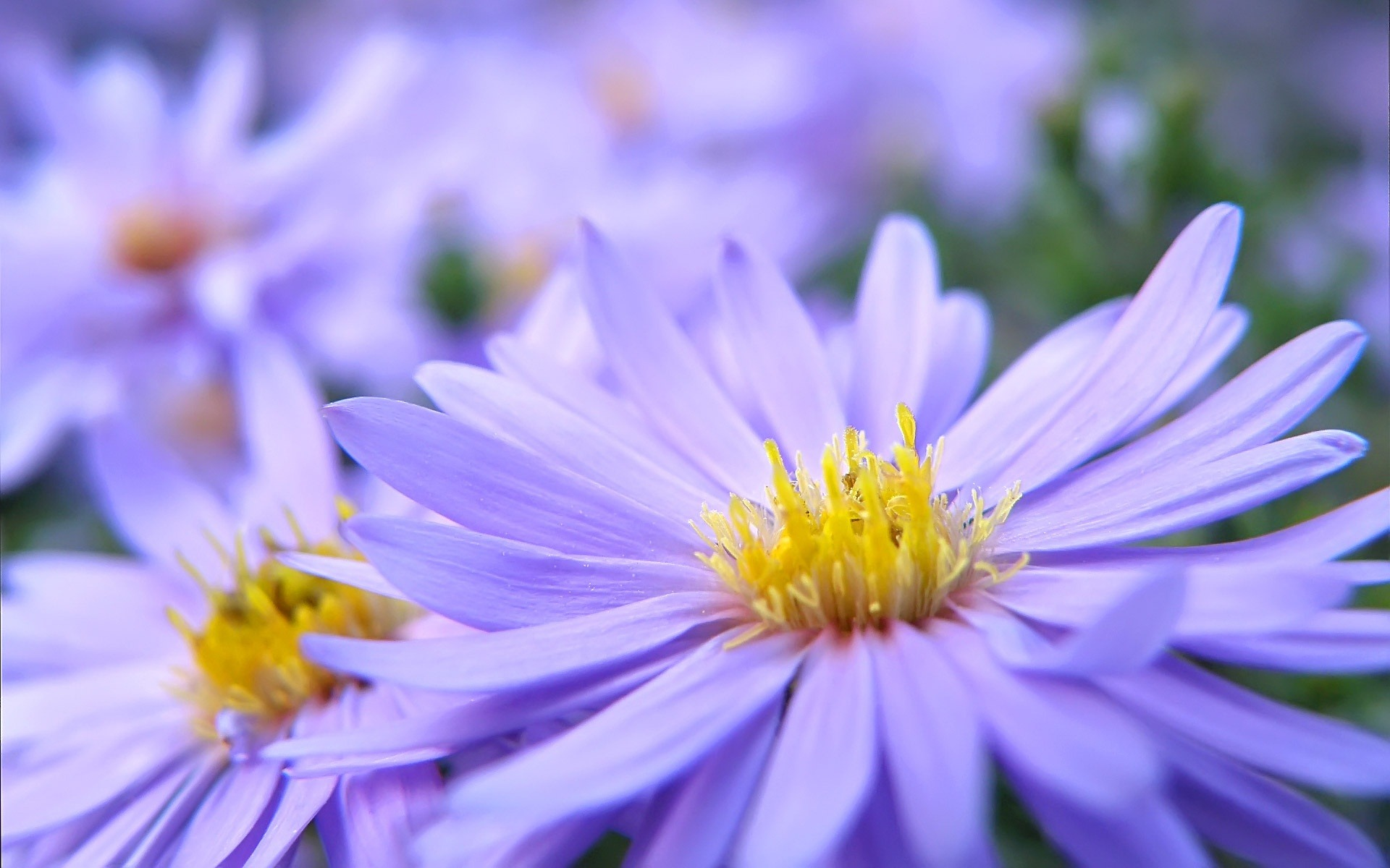 Pretty Violet Flowers Summer Flowers Wallpaper Preview 10wallpaper