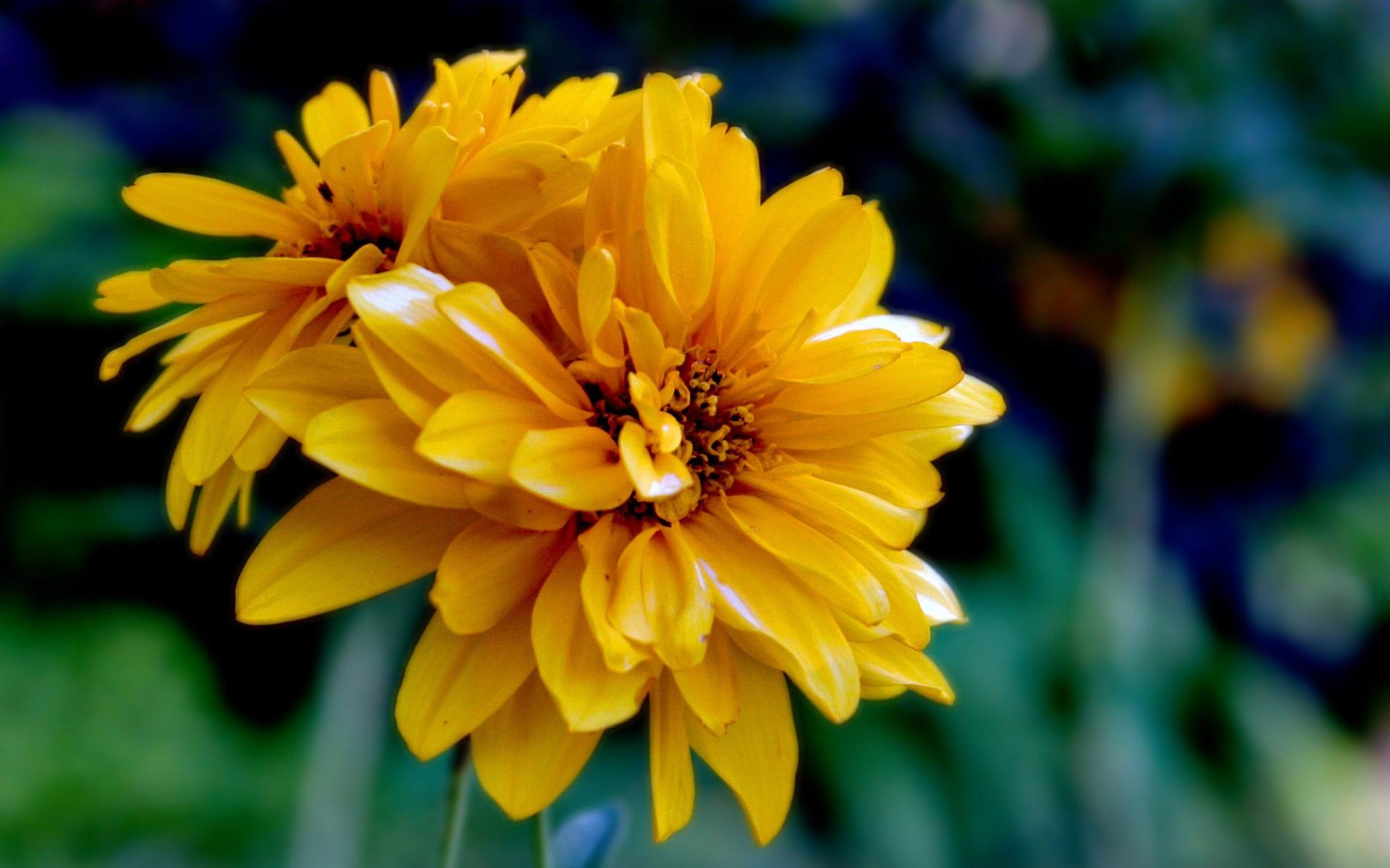 Yellow flower photography image collections flower decoration ideas yellow flower photography gallery flower decoration ideas yellow flower photography choice image flower decoration ideas yellow mightylinksfo
