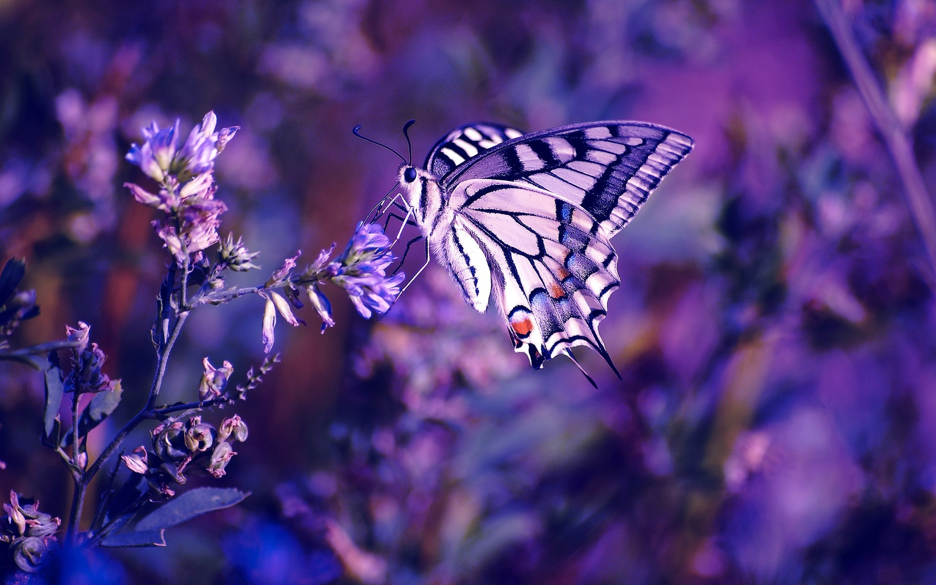 Beautiful Butterfly Wild Animals Photo Wallpaper Preview