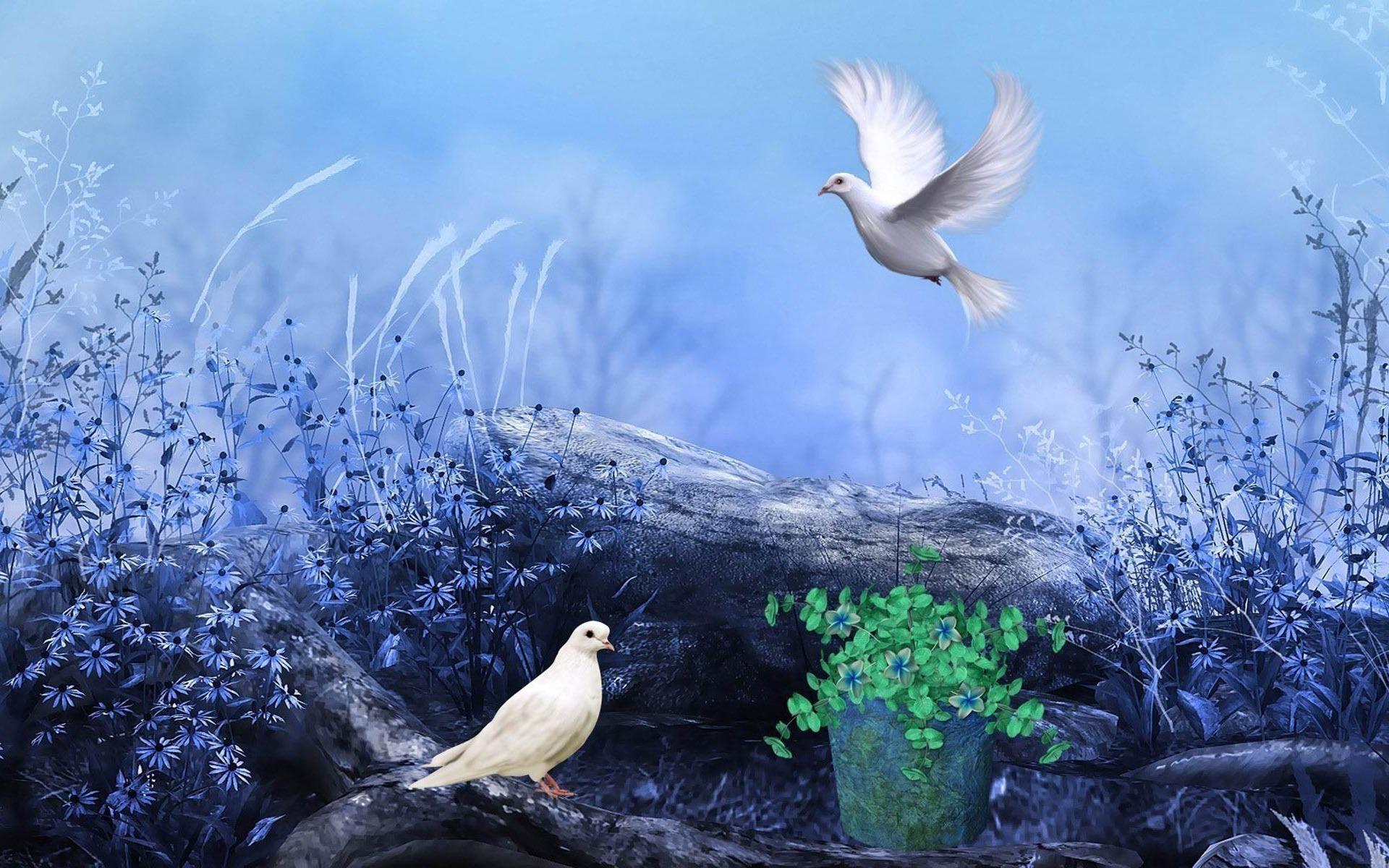 荒野の中に鳩 デジタルアートデザインのhd壁紙プレビュー 10wallpaper Com
