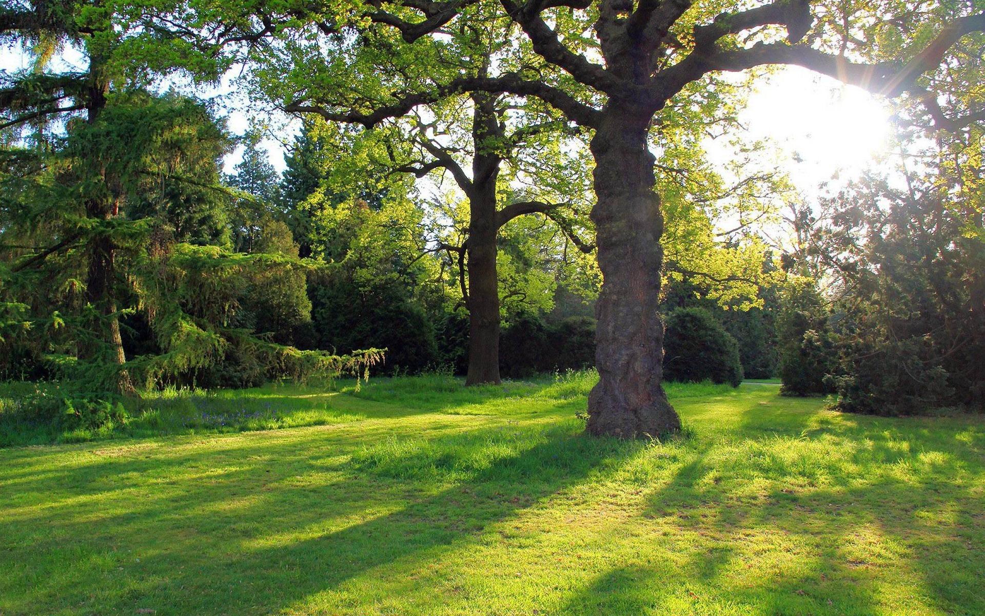 Ch 234 Ne Dans Le Parc Paysage Naturel 233 Cran Fond D 233 Cran 1920x1200 T 233 L 233 Chargement 10wallpaper Com