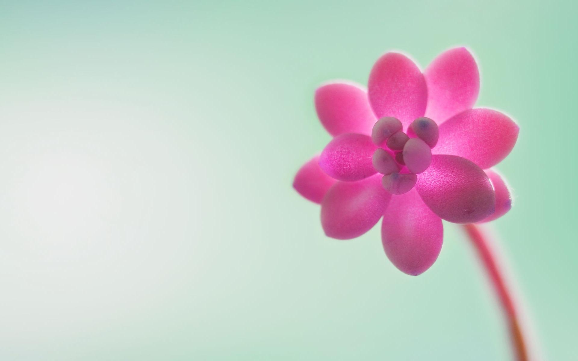 fleurs roses-De...
