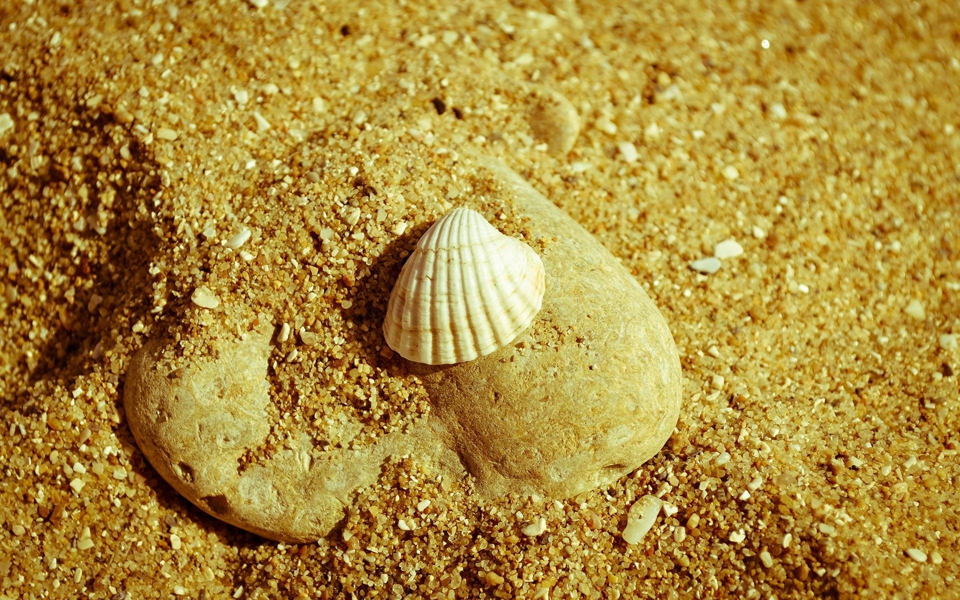 貝殻と岩 高品質の壁紙プレビュー 10wallpaper Com