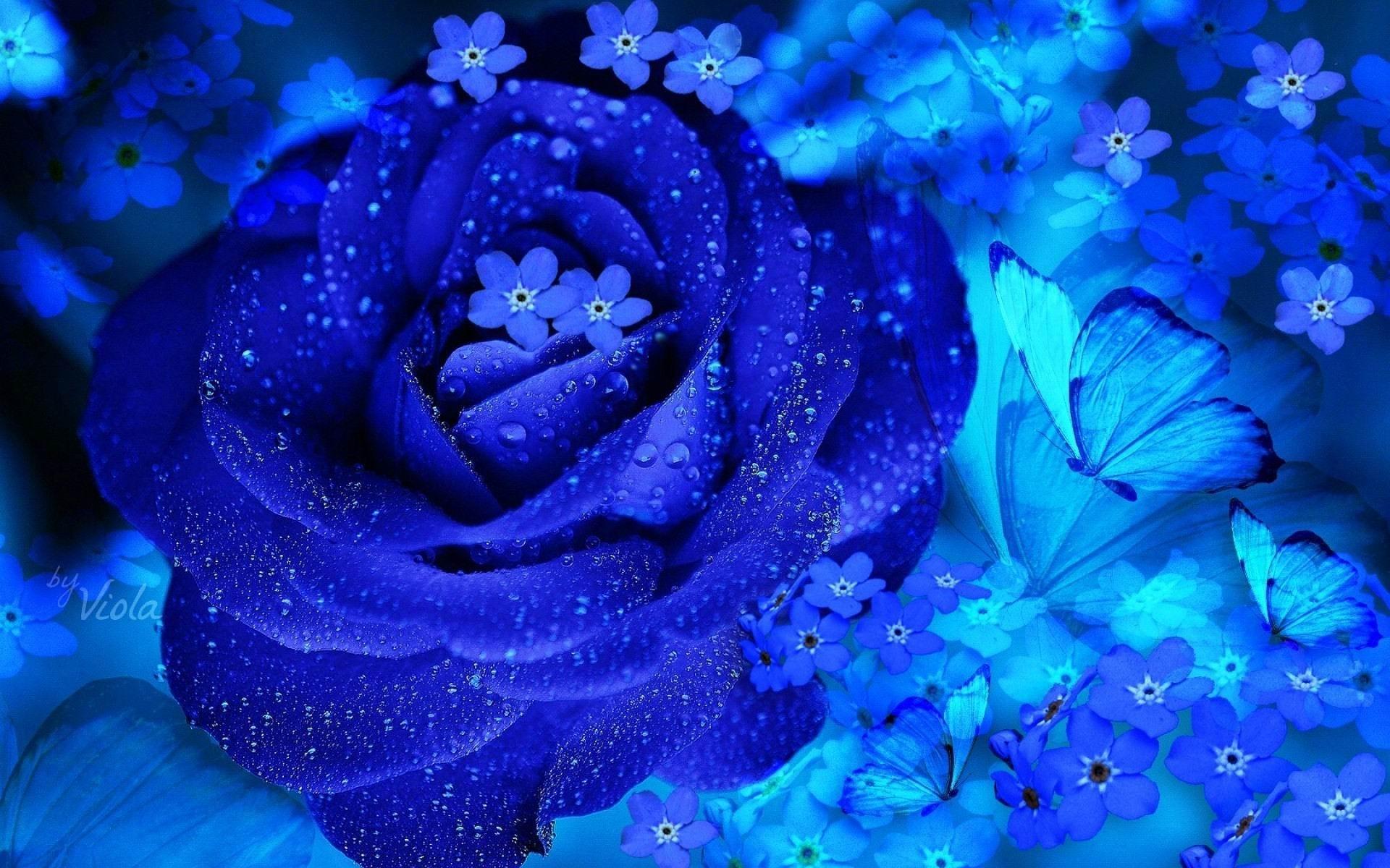 Красивые картинки с розами синими