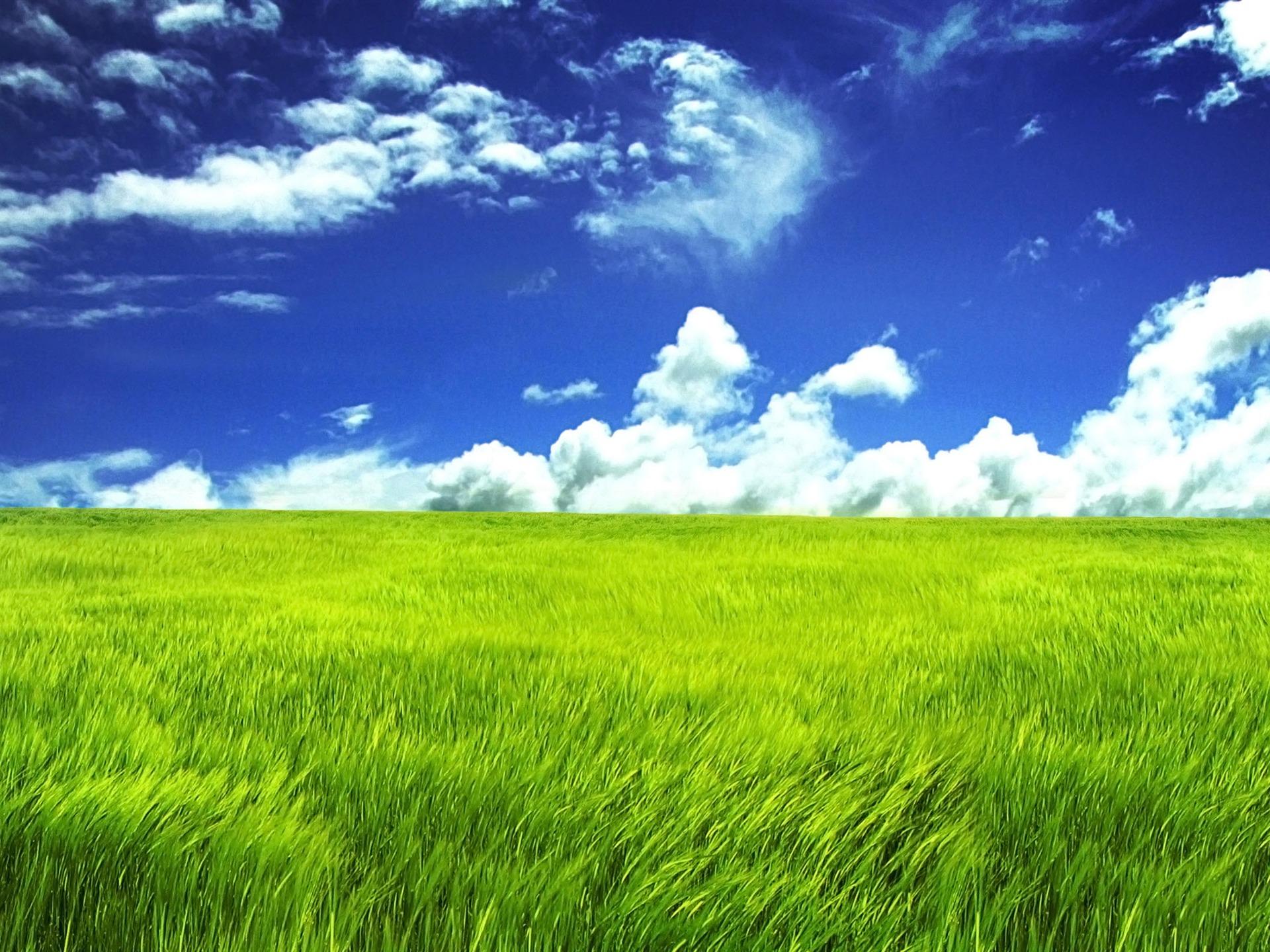 青空の下で草原-素晴らしい自然プレビュー | 10wallpaper.com