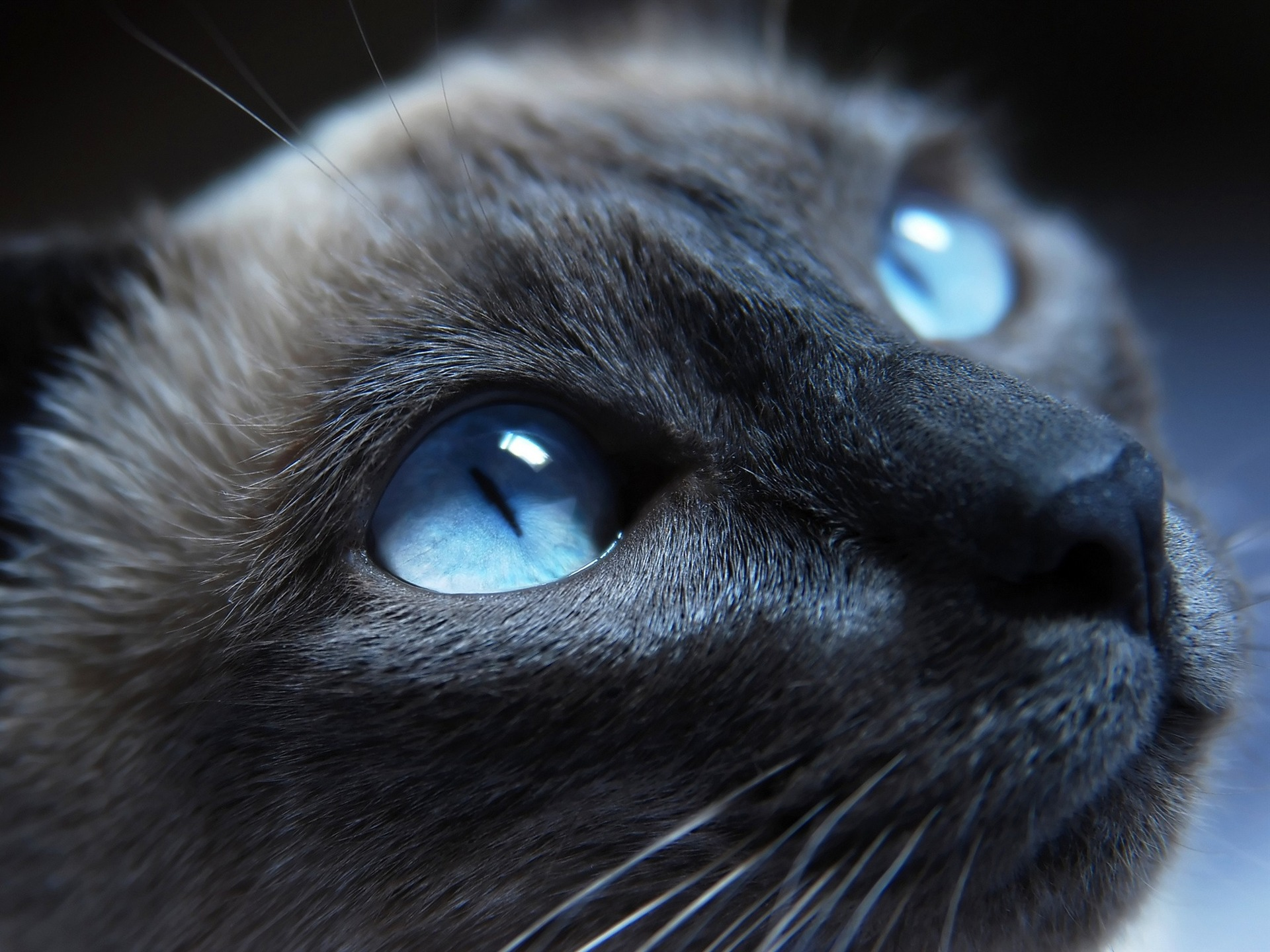 L'image d'avant Black_Cat_with_Blue_Eyes_01-Cute_little_kitty_cat_living_wallpaper_1920x1440