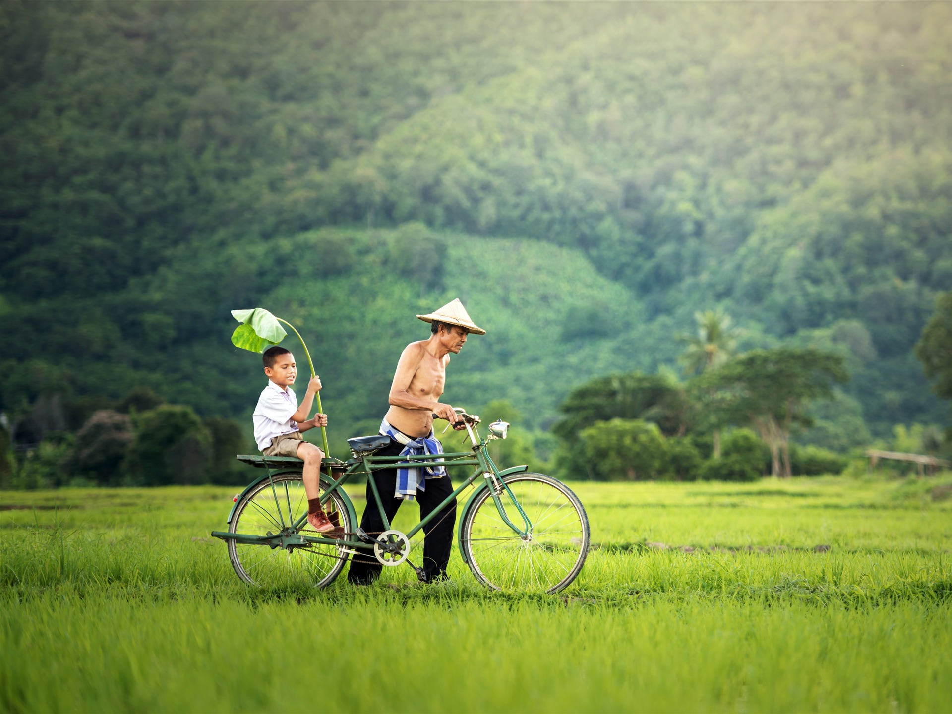 Summer Fathers Day Jungle Field Sunny Bike - 1920x1440 wallpaper download