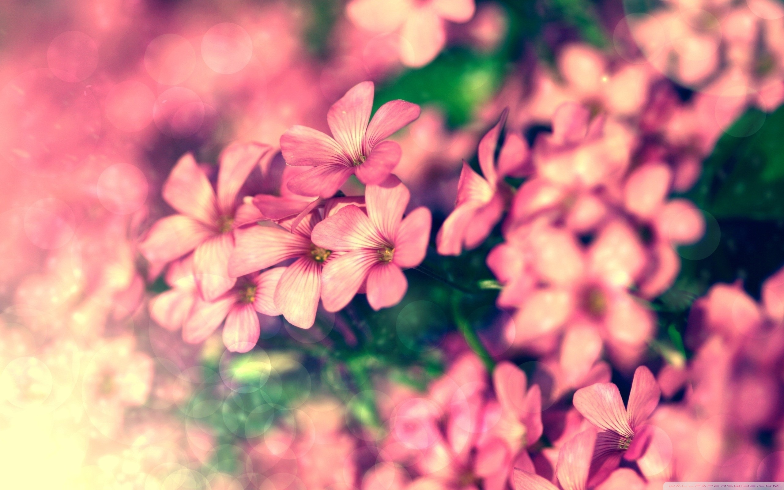 Tiny pink flowers beautiful flowers desktop wallpaper preview original resolution 2560x1600 izmirmasajfo