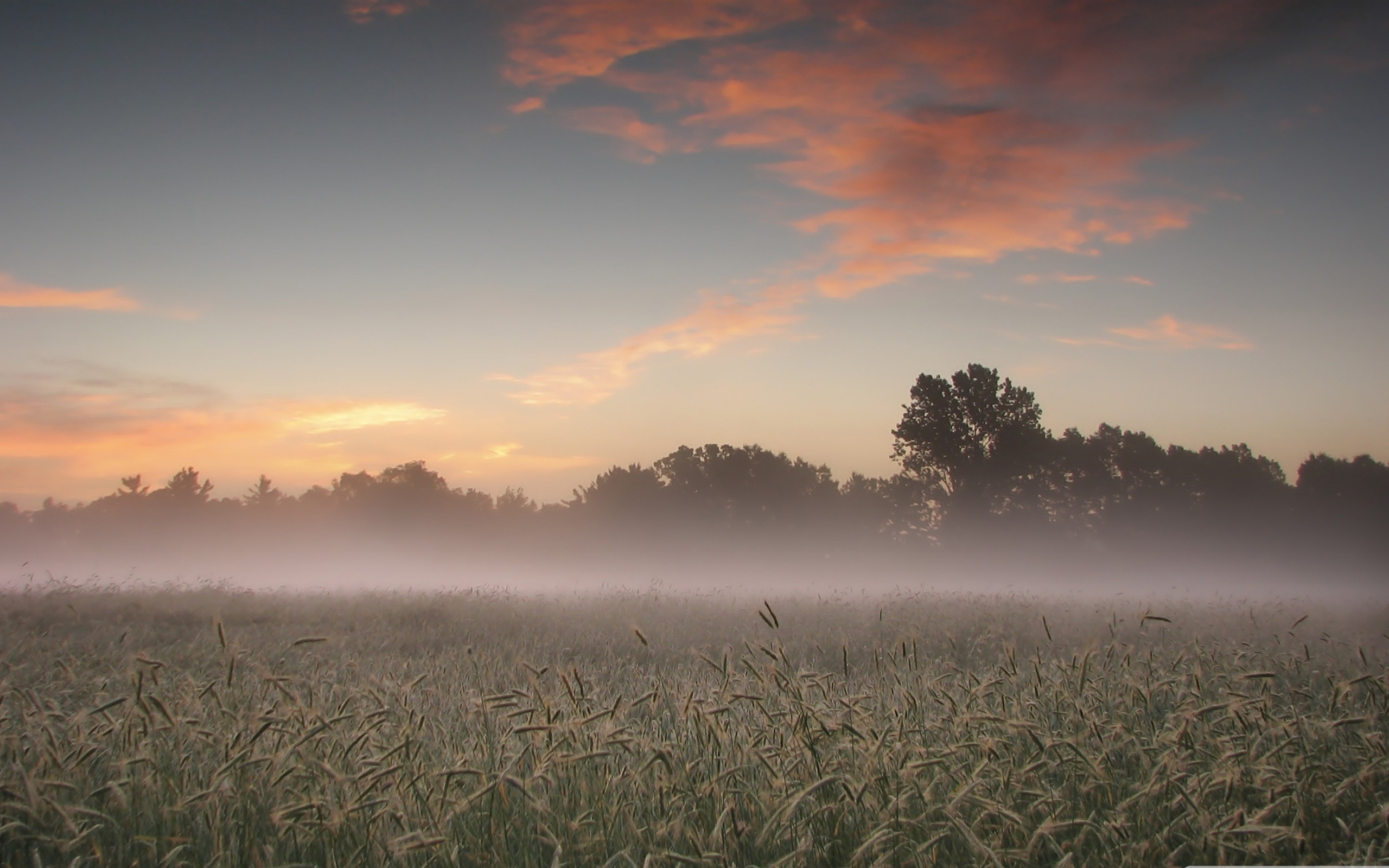 Early morning mist beautiful natural scenery wallpaper