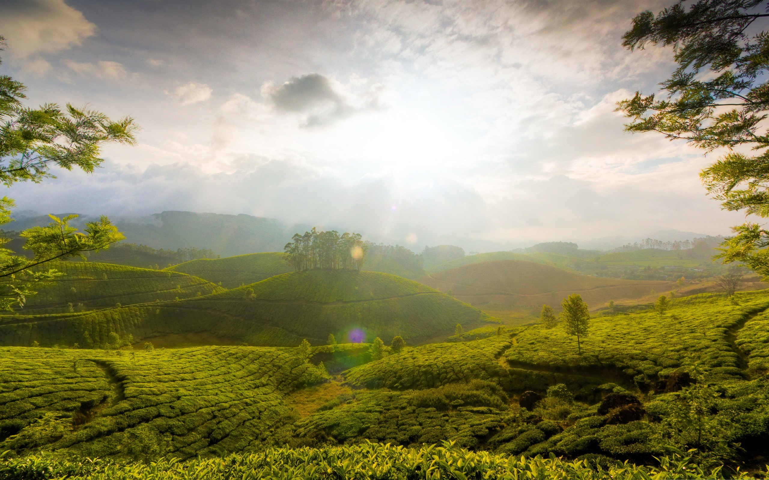 Munnar hill india beautiful natural scenery desktop wallpapers landscape munnar hill india beautiful natural scenery de munnarhillindia beautifulnaturalscenerydesktopwallpapers voltagebd Image collections
