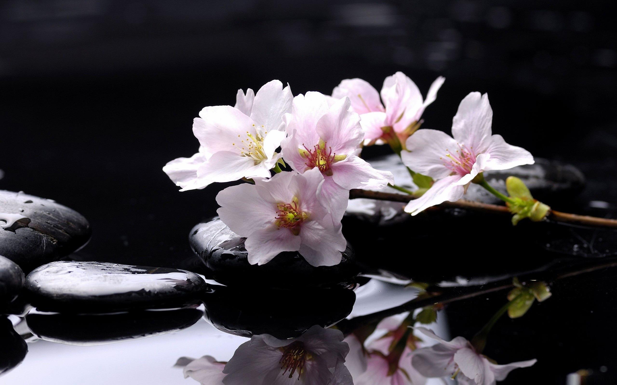 Pierres zen desktop fleurs fonds d 39 cran 2560x1600 for Imagenes zen