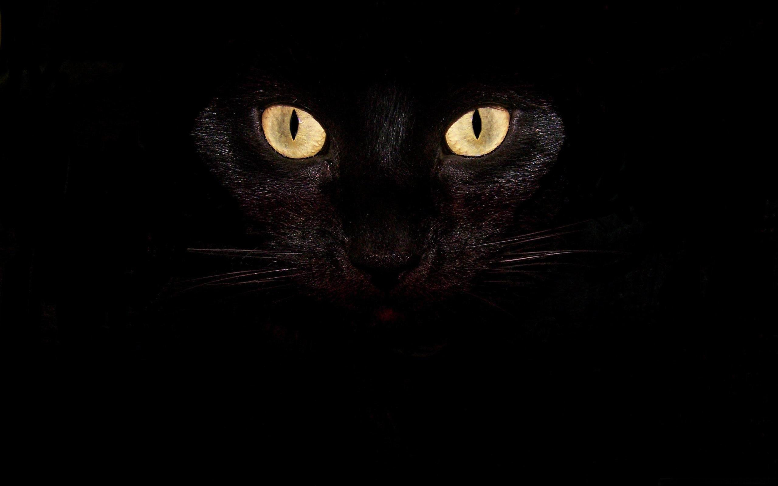 Black Cat Eyes Wallpaper: Black Cat Eyes-Cute Pet Cat Desktop Pictures-2560x1600