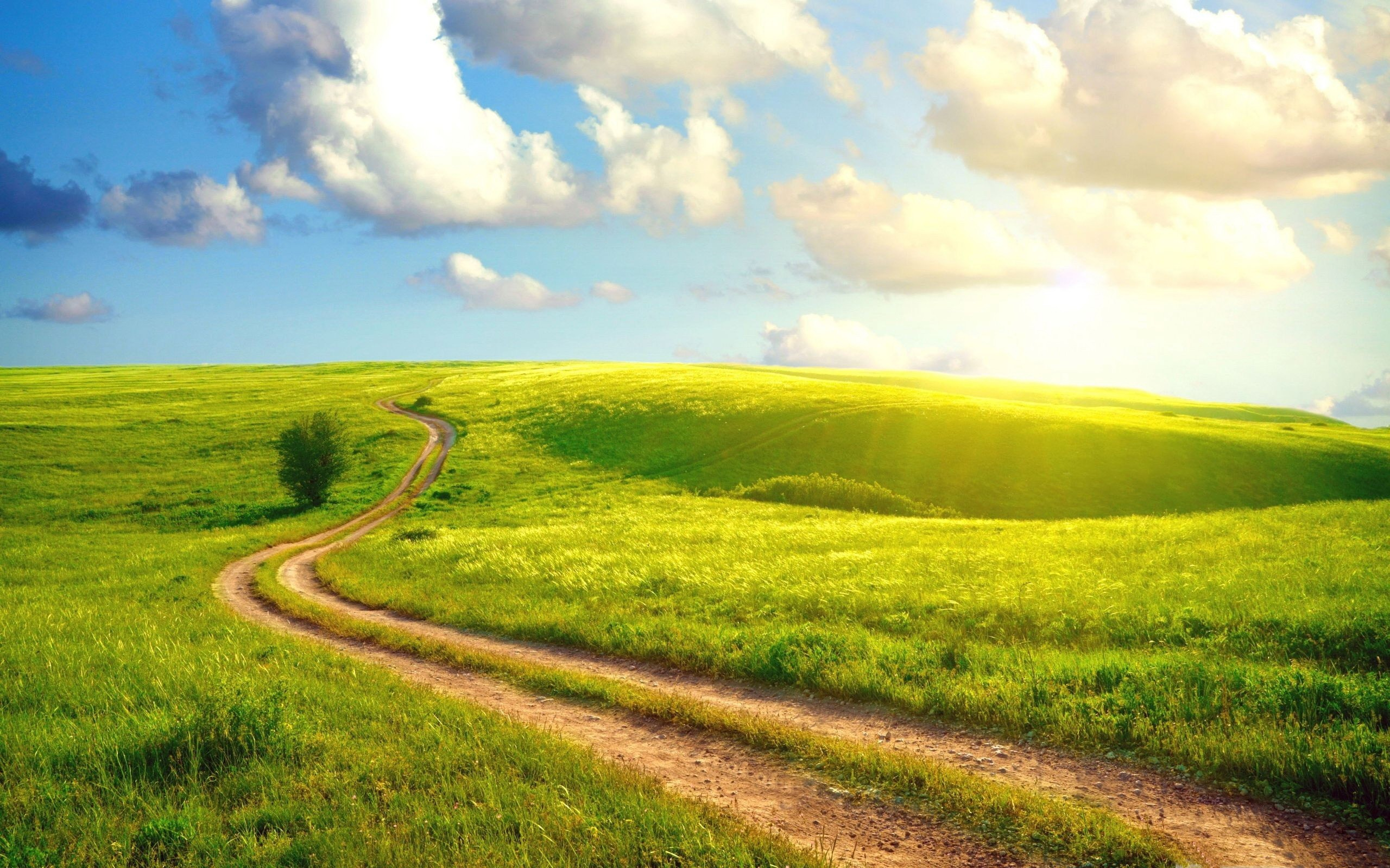 Beautiful Summer Landscape With A Field Path HD Desktop