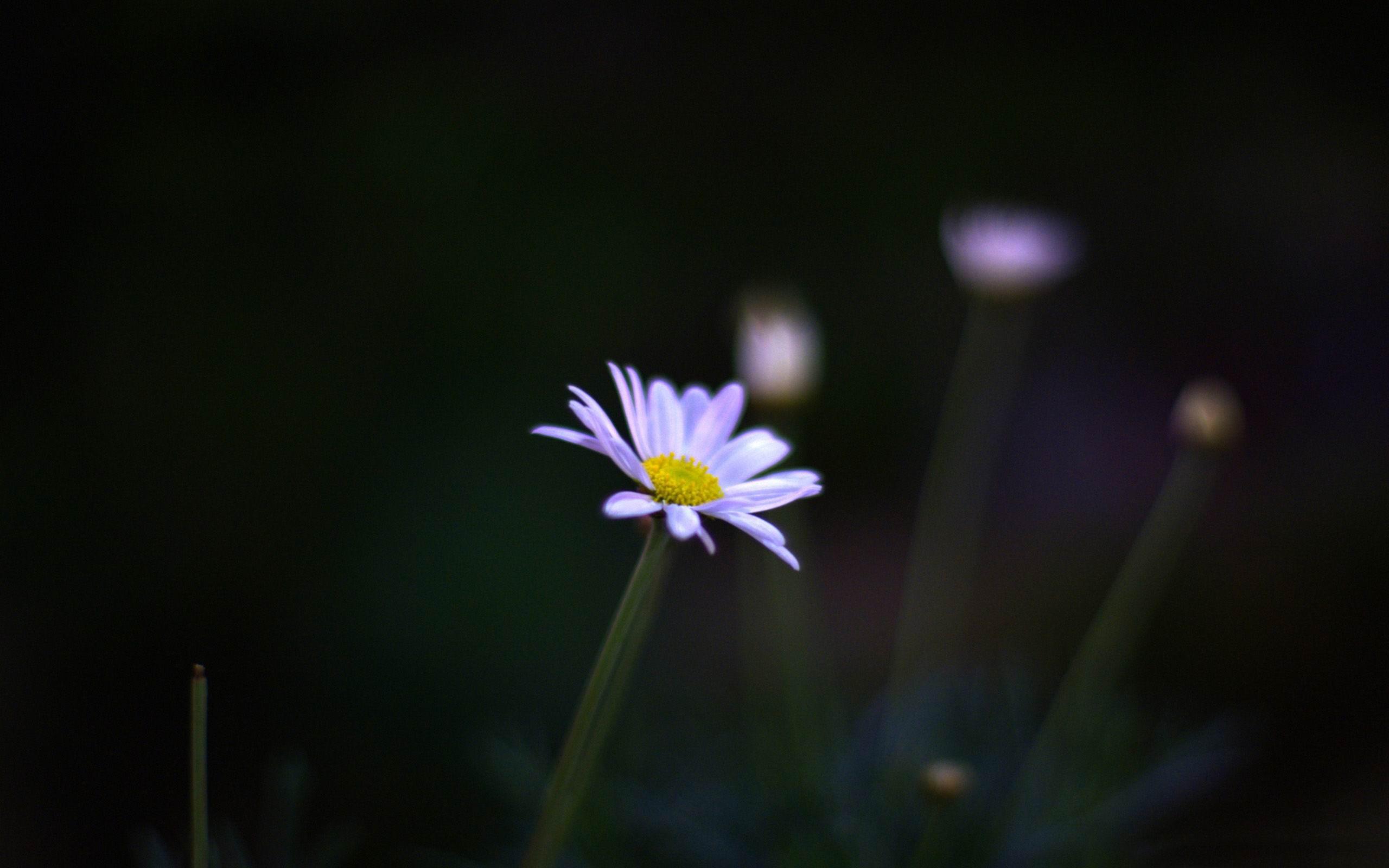 Flor En Fotografia De Flores Nocturnas Fondo De Pantalla Avance