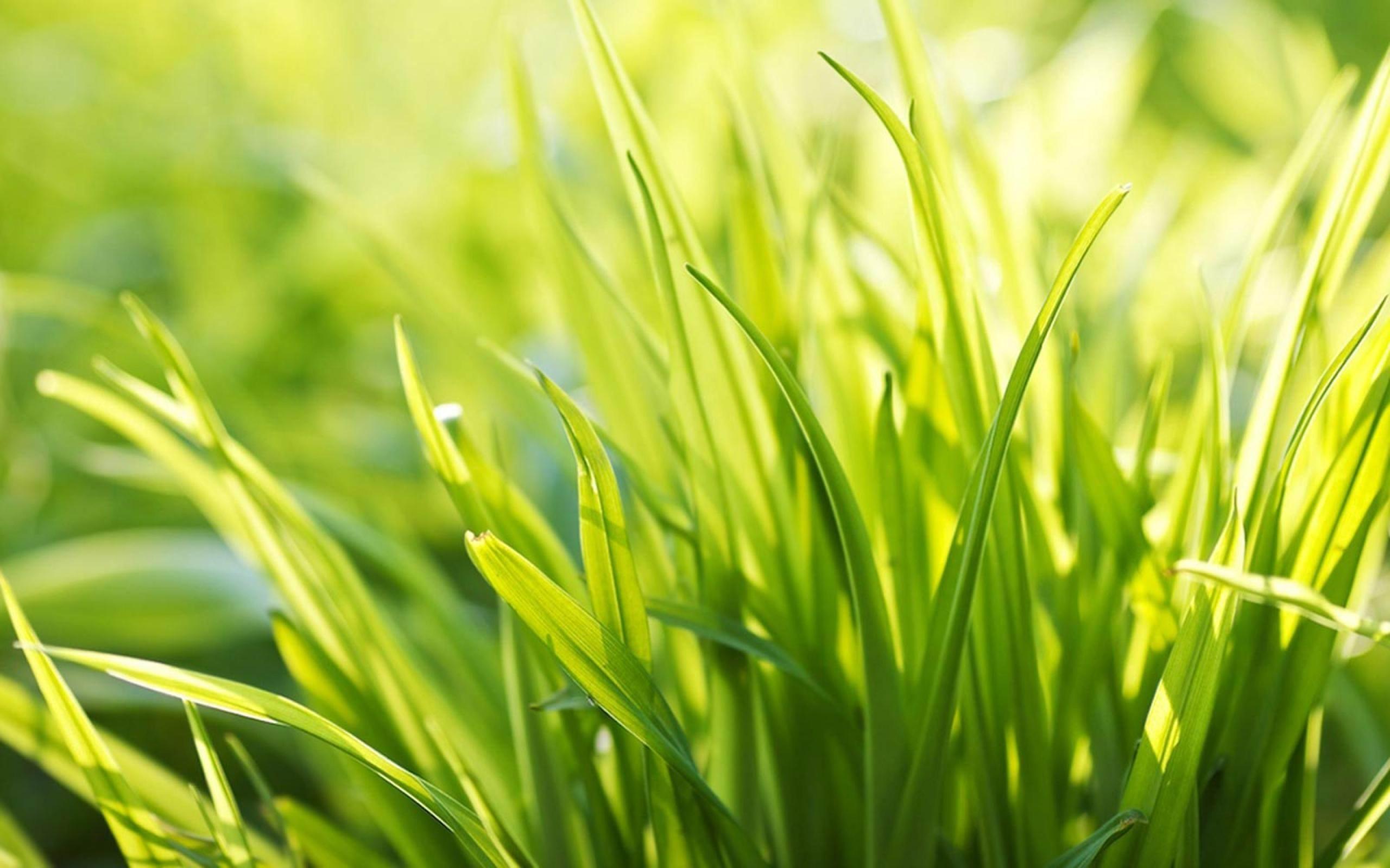 Herbe soleil nature plante fond d 39 cran 2560x1600 for Plante herbe haute