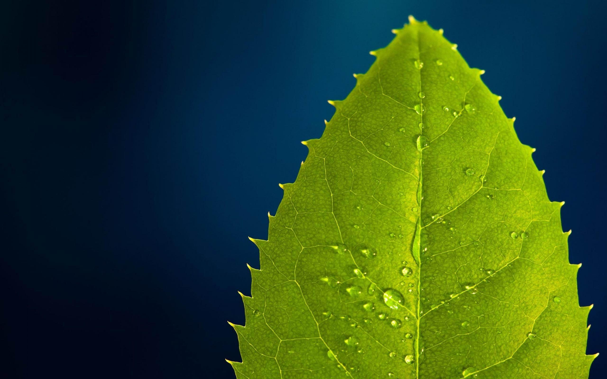 グリーンリーフを削除し 植物クローズアップ壁紙プレビュー 10wallpaper Com