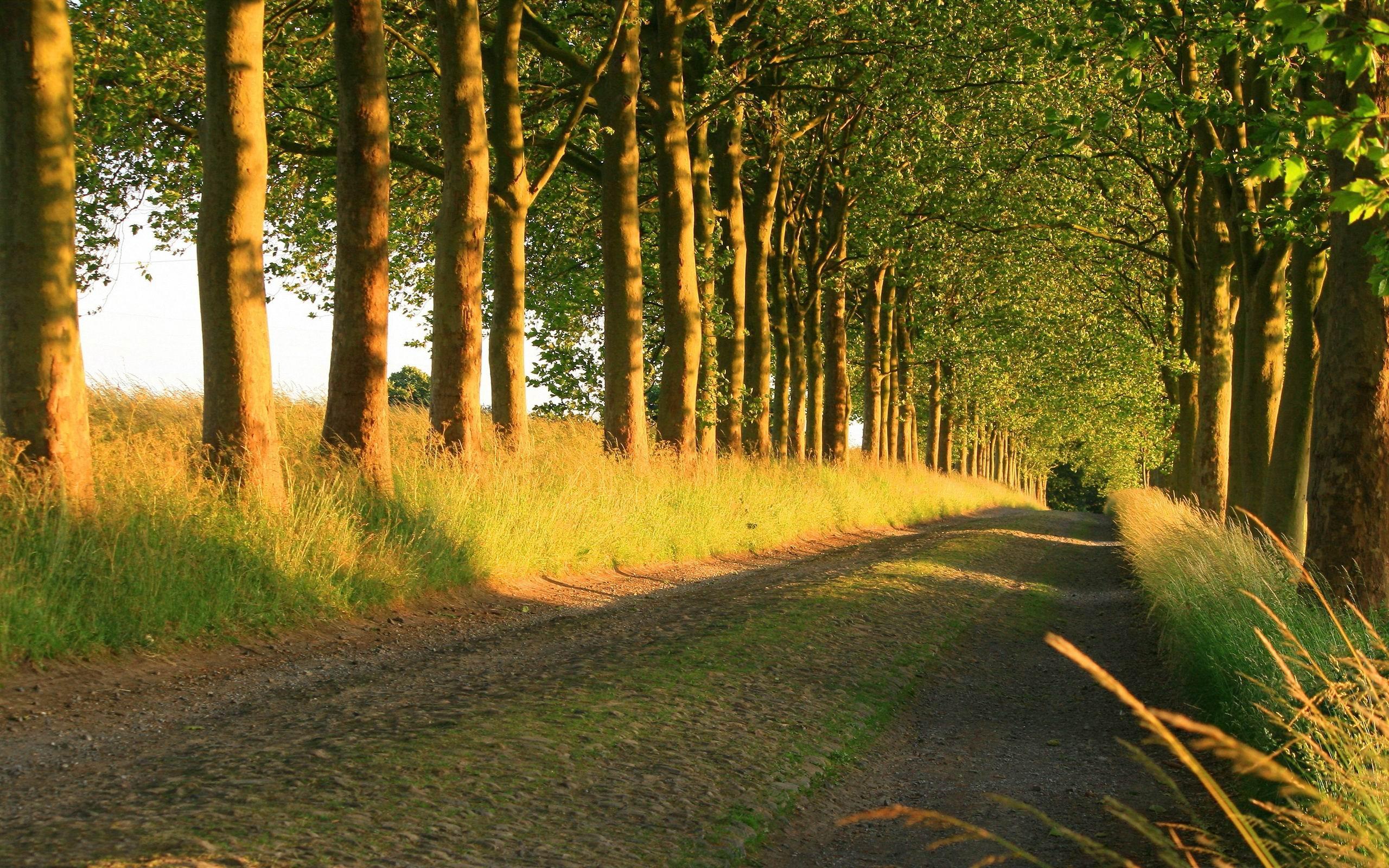Belle Route Ensoleillee Hd Fond D Ecran Apercu 10wallpaper Com